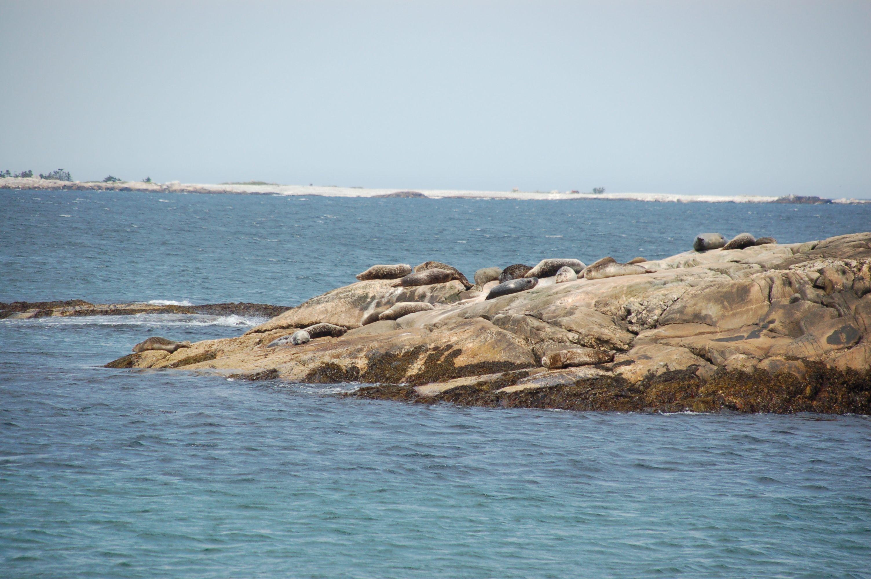 Nova Scotia28
