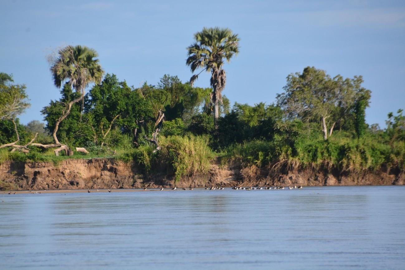 Auf zur Fluss-Safari