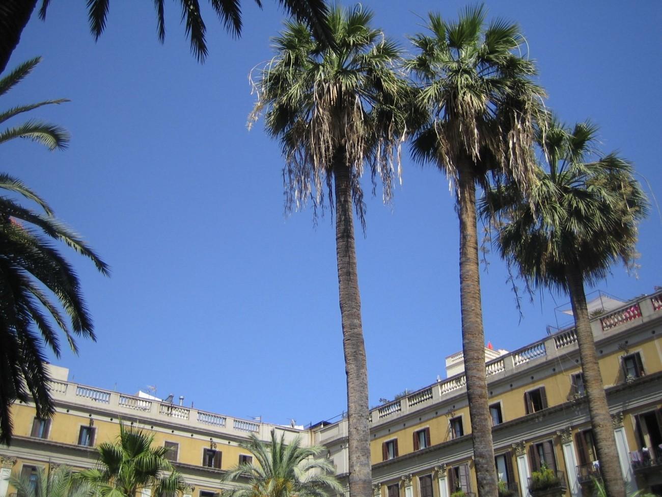 Ein Espresso unter Palmen