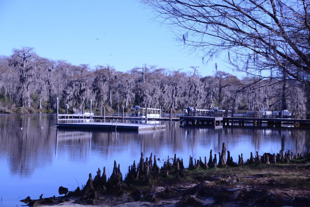 Abgestorbene Wurzeln, kahle Bäume: Vor allem im Winter wirkt Wakulla Springs wie die perfekte Kulisse für einen Gruselfilm