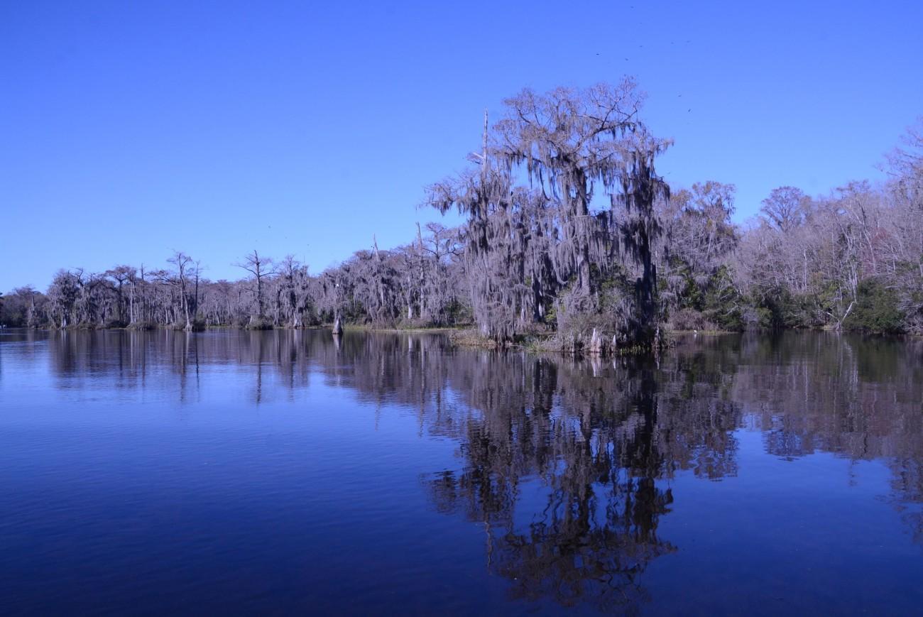 Sumpfzypressen flankieren die Ufer der Quellen. Von ihren Ästen hängt Spanisches Moos herab.