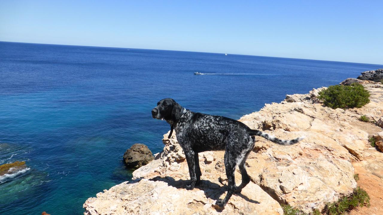 Mein letzter Dank gilt dem iberischen Hund, der mich ein Weilchen begleitet hat. Ich habe ihn Iniesta genannt