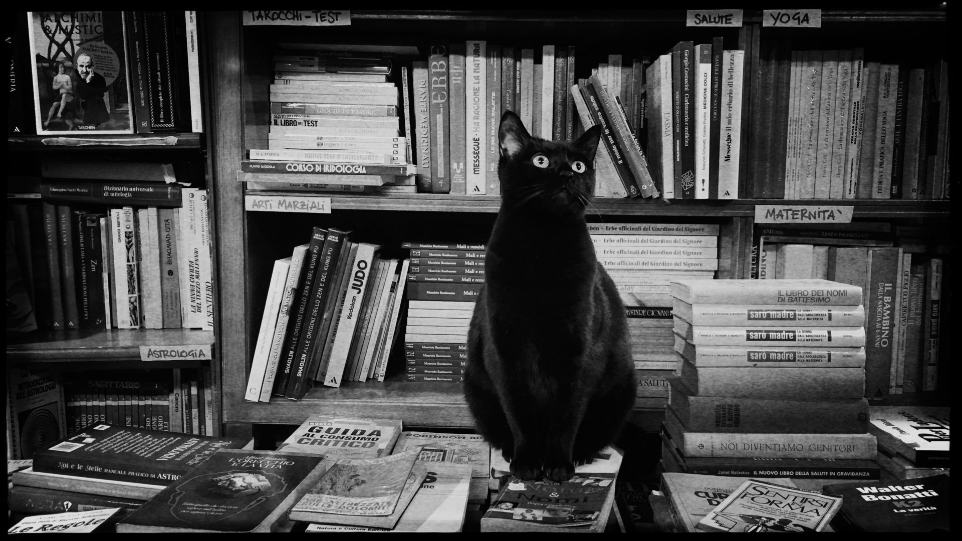 Schwarze Katze in einer Buchhandlung in Venedig