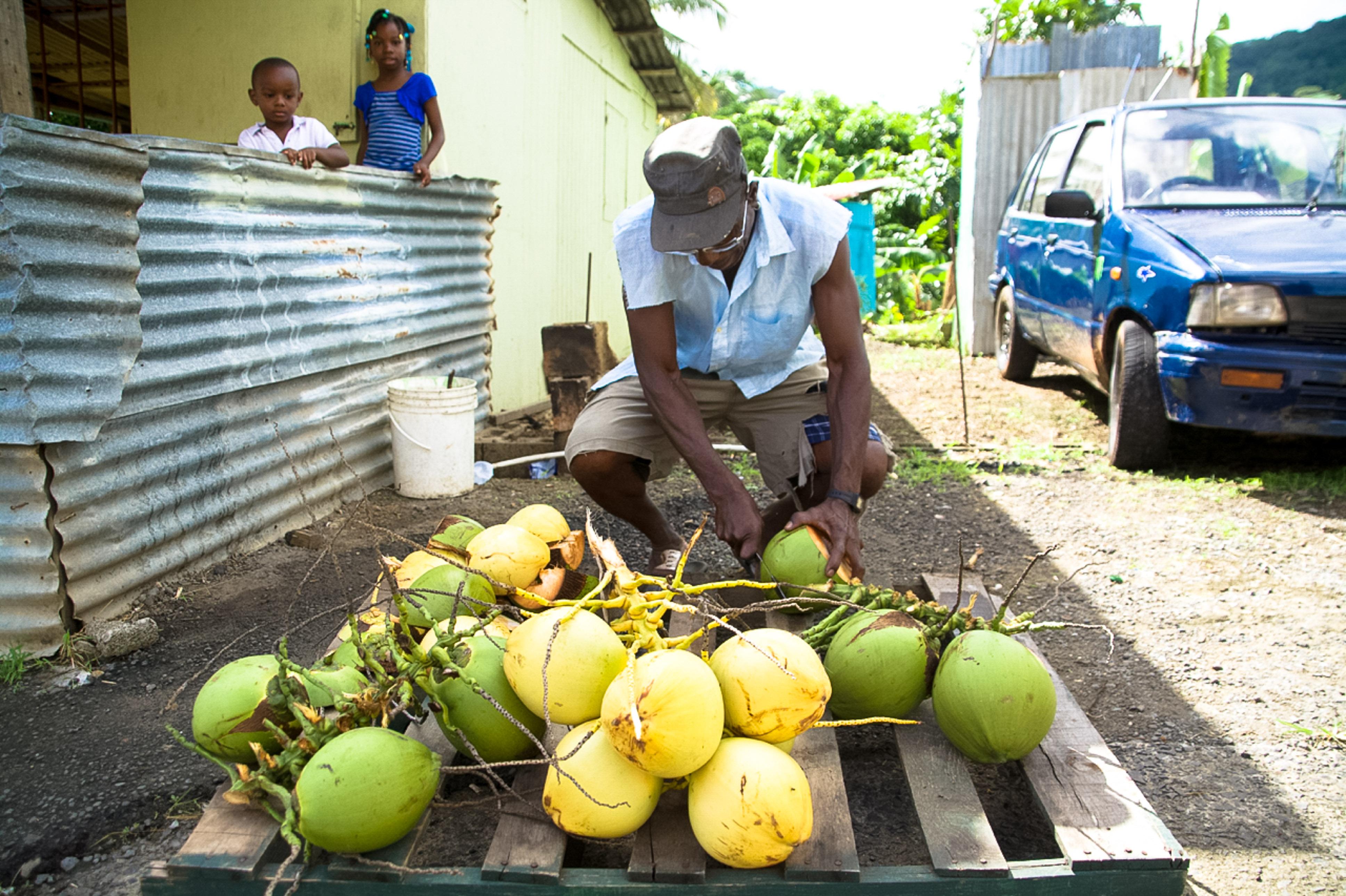 Kokosnüsse auf St. Lucia, Bergdorf