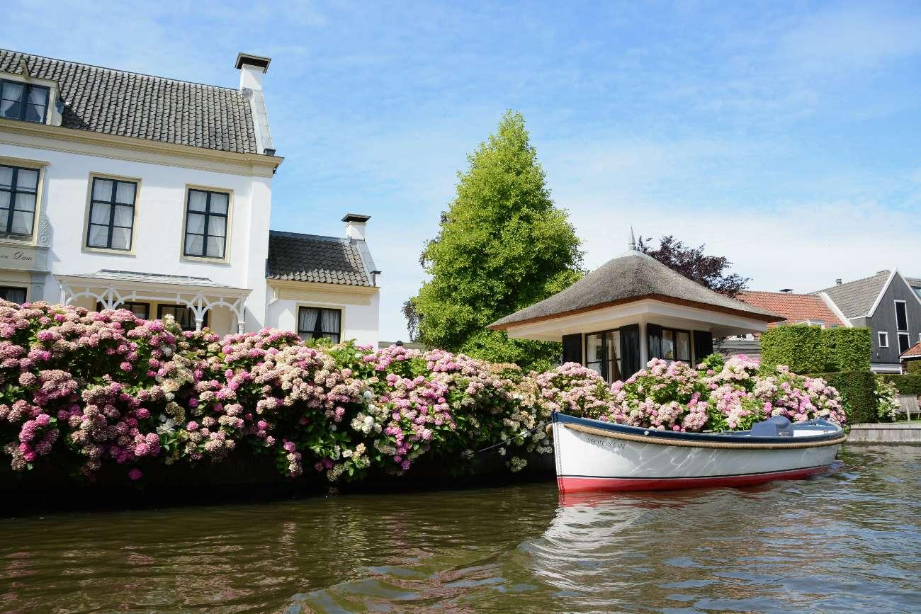Hortensiengarten am Prachtfluss Vecht in der Provinz Utrecht in den Niederlanden