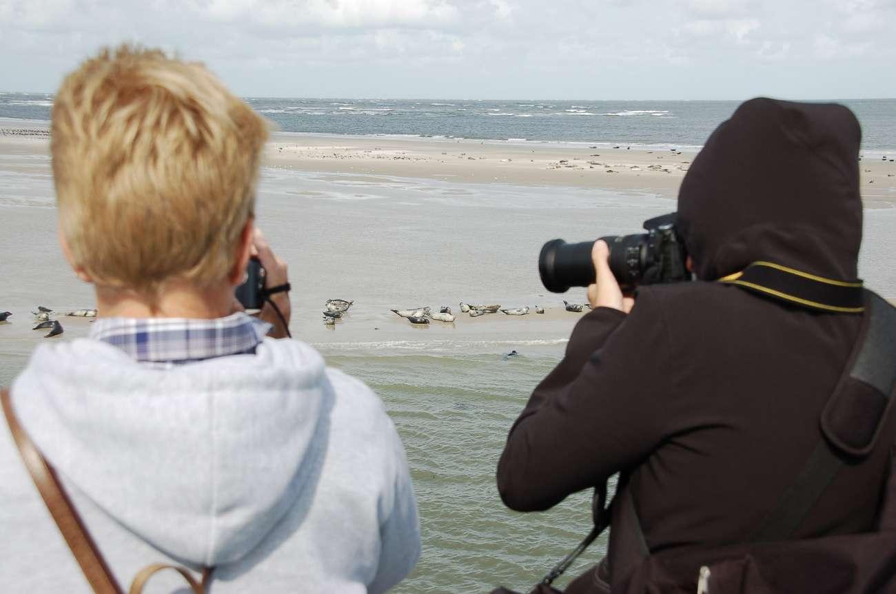 Seehunde und Kegelrobben auf einer Sandbank bei Ameland der niederländischen Nordseeinsel