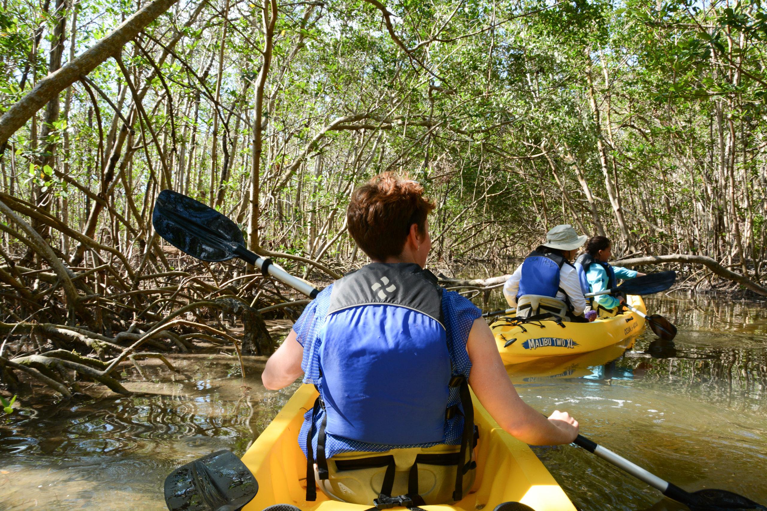 Paddeln durch einen Mangroventunnel in Südostflorida