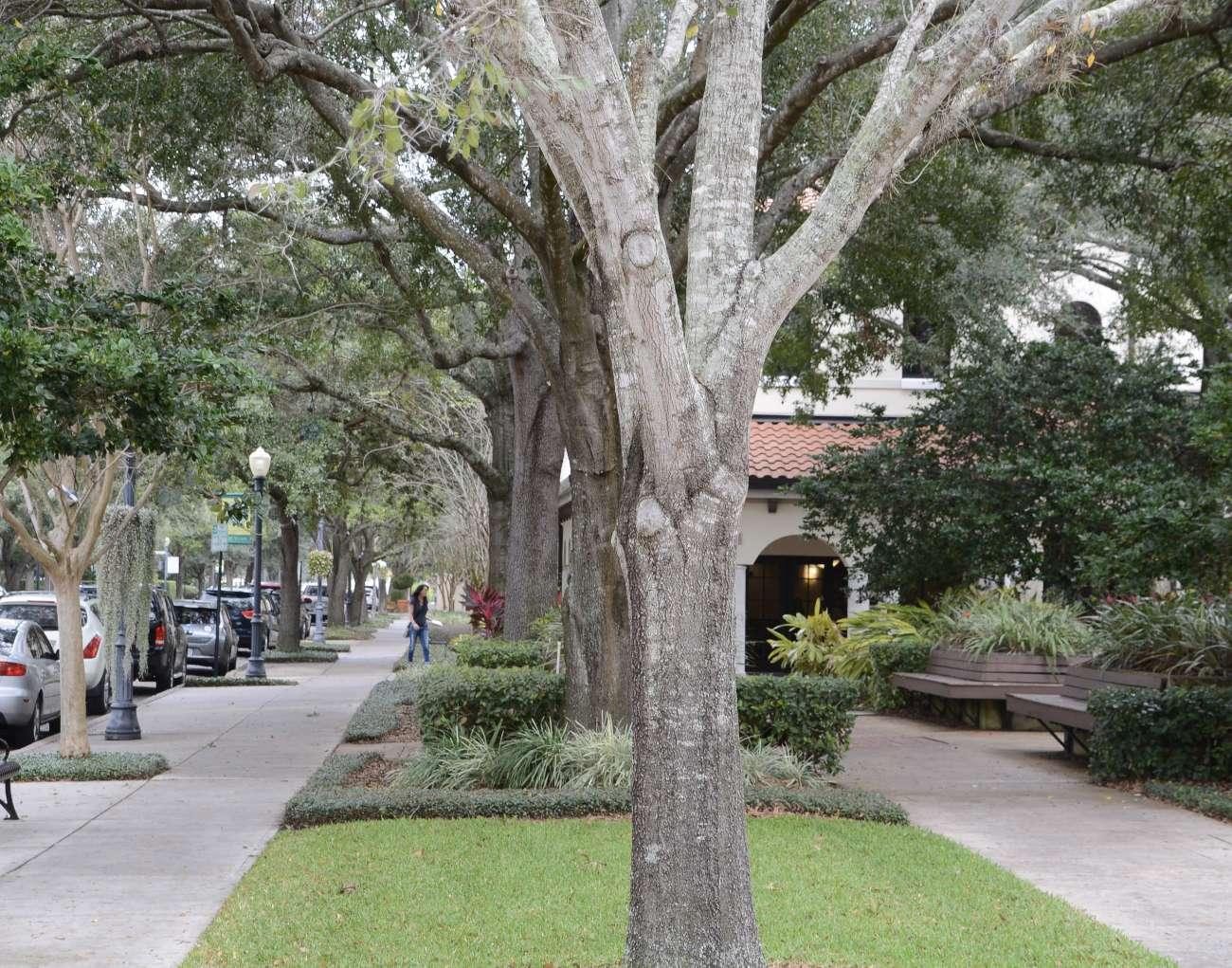 Seitenstraße von Park Avenue in Winter Park, Zentralflorida