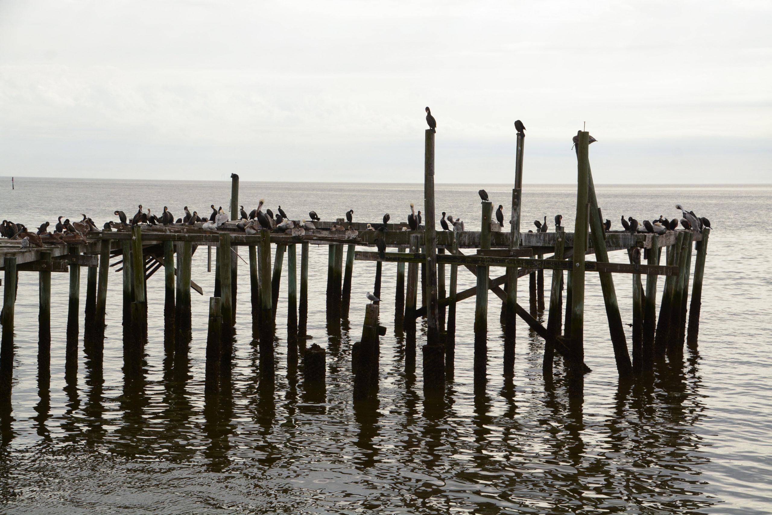 Kormorane und Pelikane ruhen auf Pfählen im Wasser