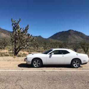 Dodge Challenger mit Yacca-Palme in Nevada vor Hügeln