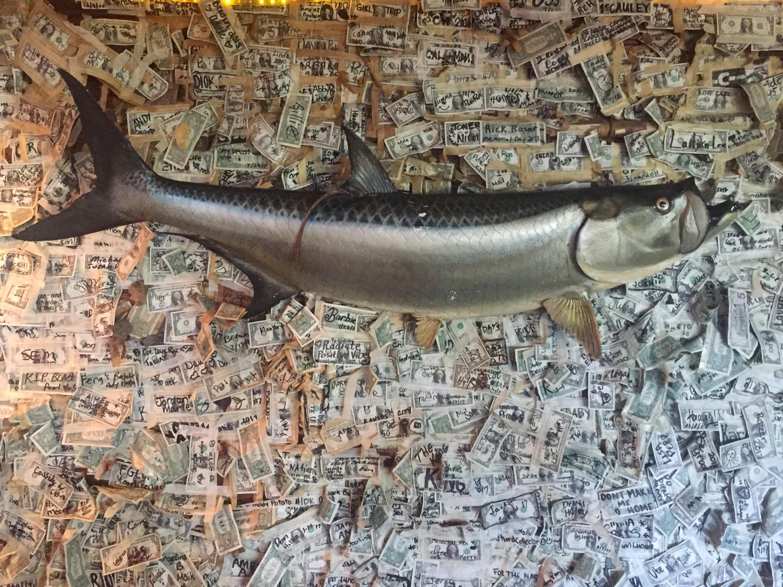 An der Wand des Restaurants auf der Insel Cabbage hängen Tausende Dollarscheine