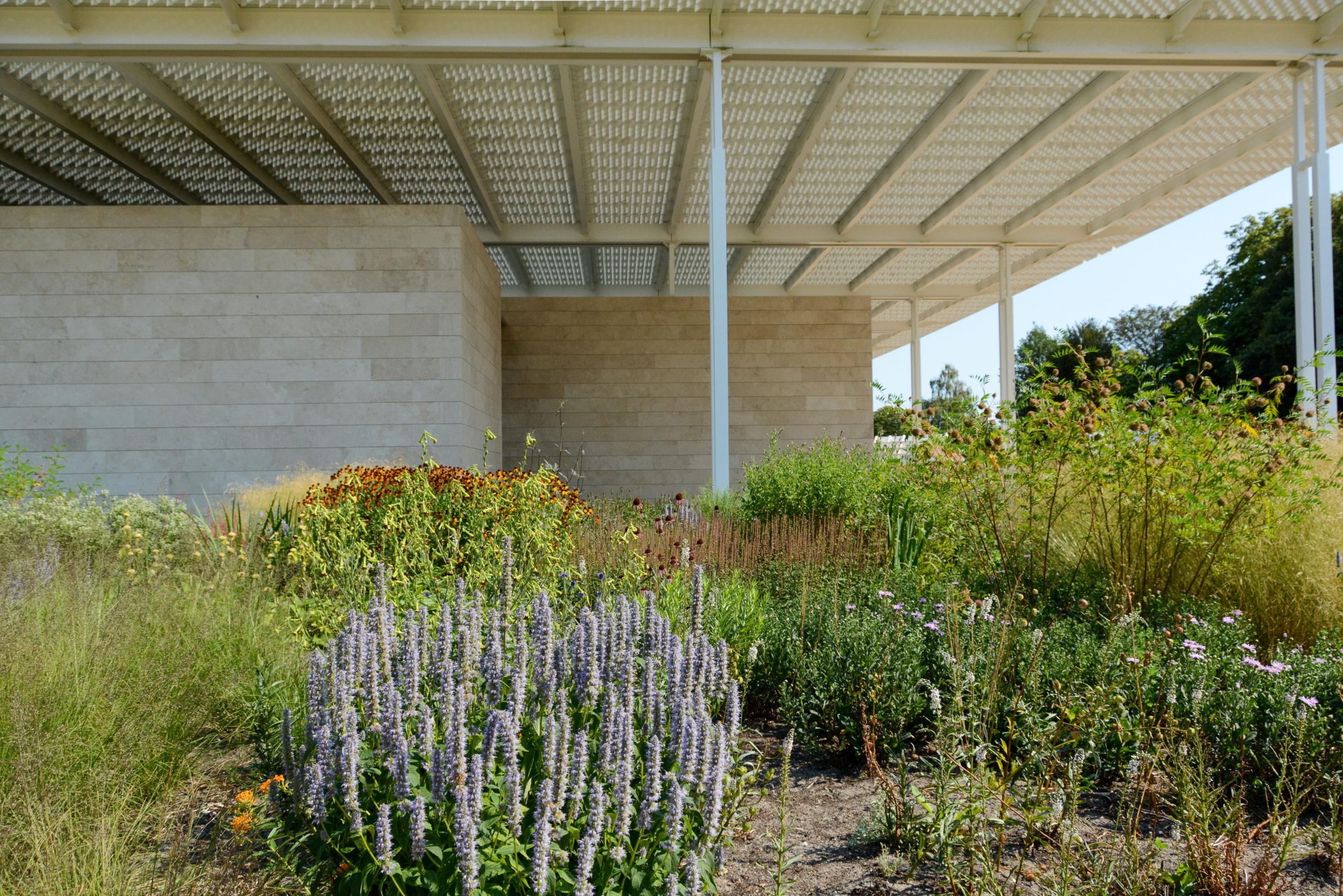 Außengelände des Baus von Dirk Jan Postels mit Lavendel und anderen Gewächsen