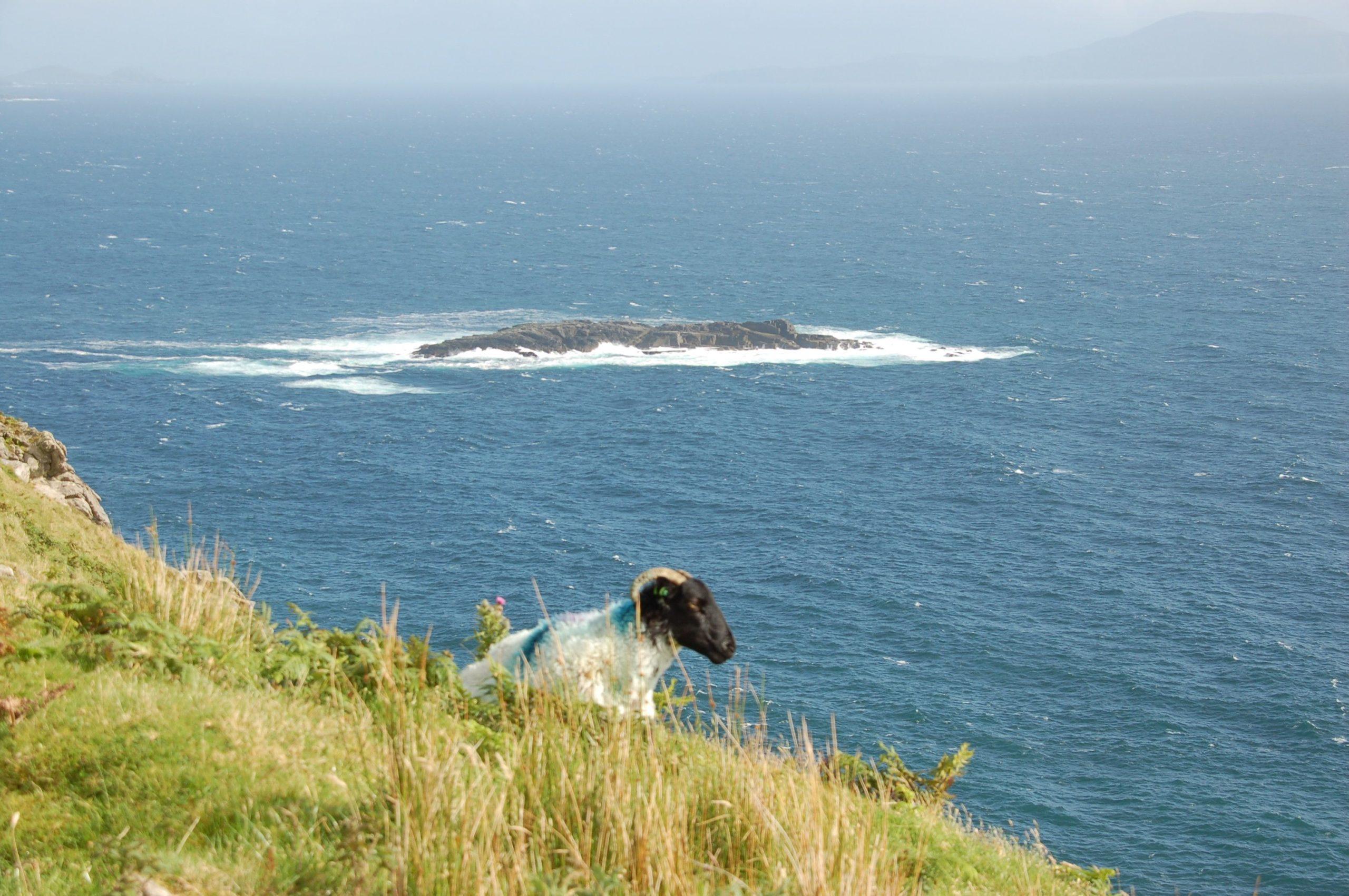 Eine Ziege ruht auf einem malerischen Felsen auf Achill Island in Irland