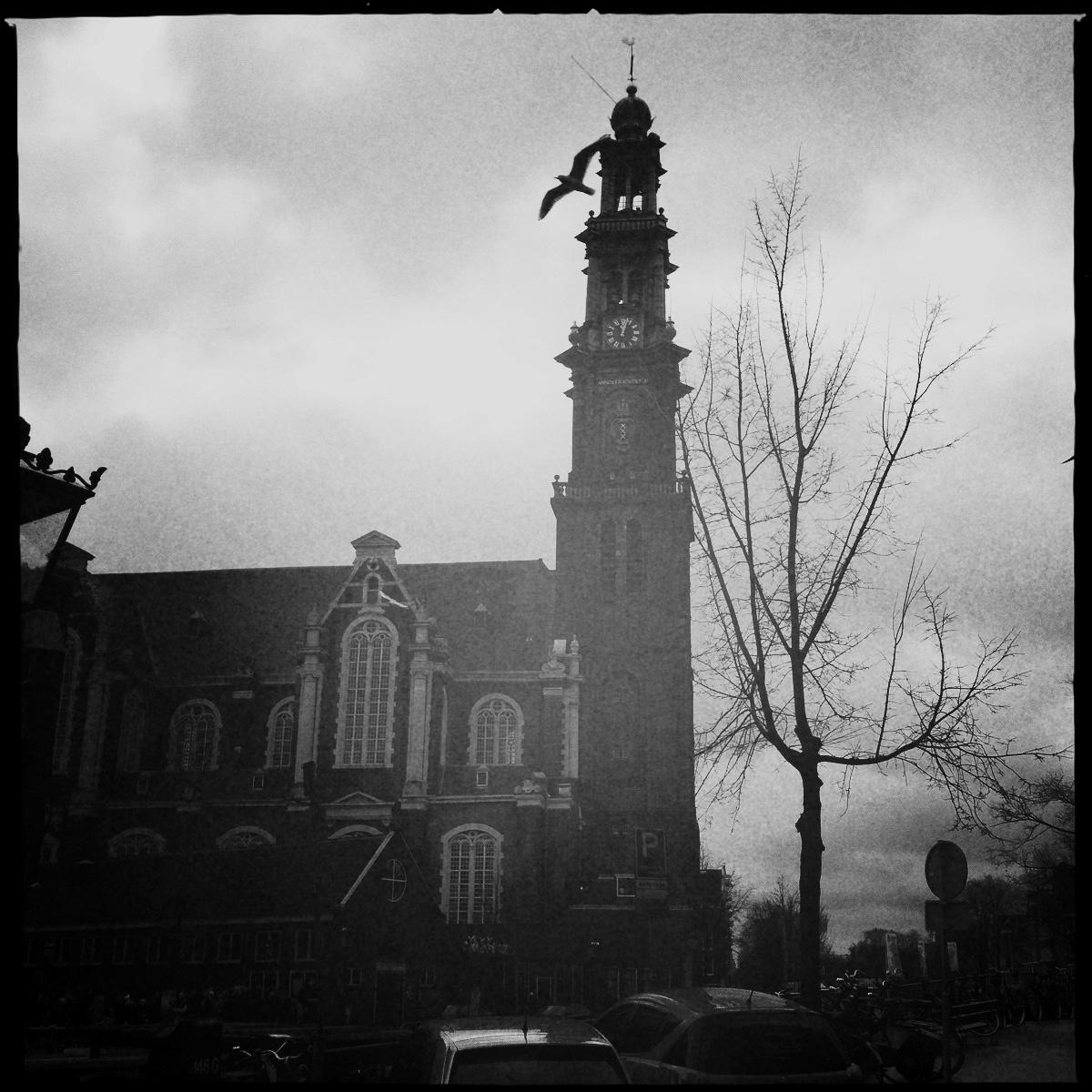 Die Westerkerk mit einer vorbeifliegenden Möwe