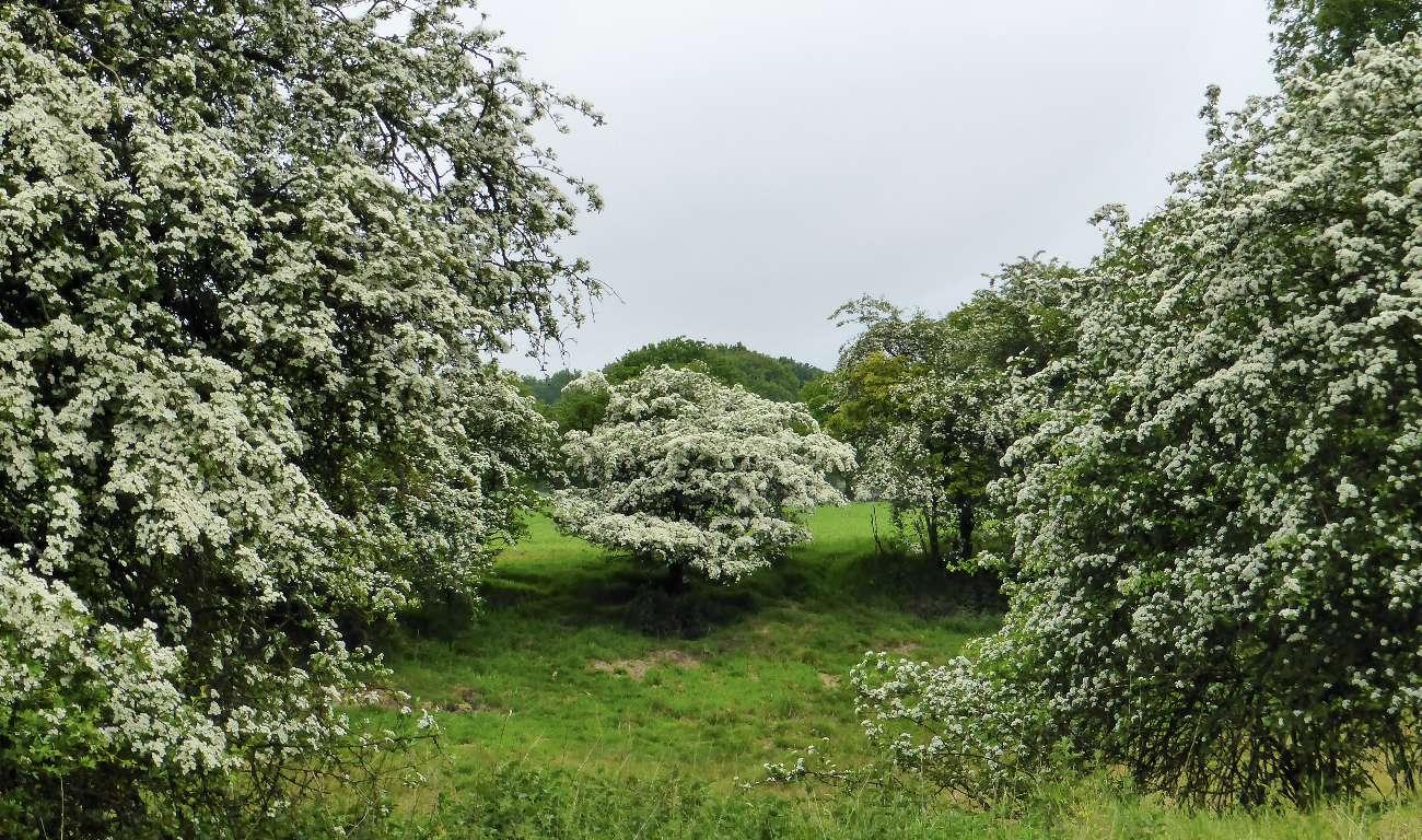 Die Hoge Veluwe im Frühjahr mit blühenden Bäumen