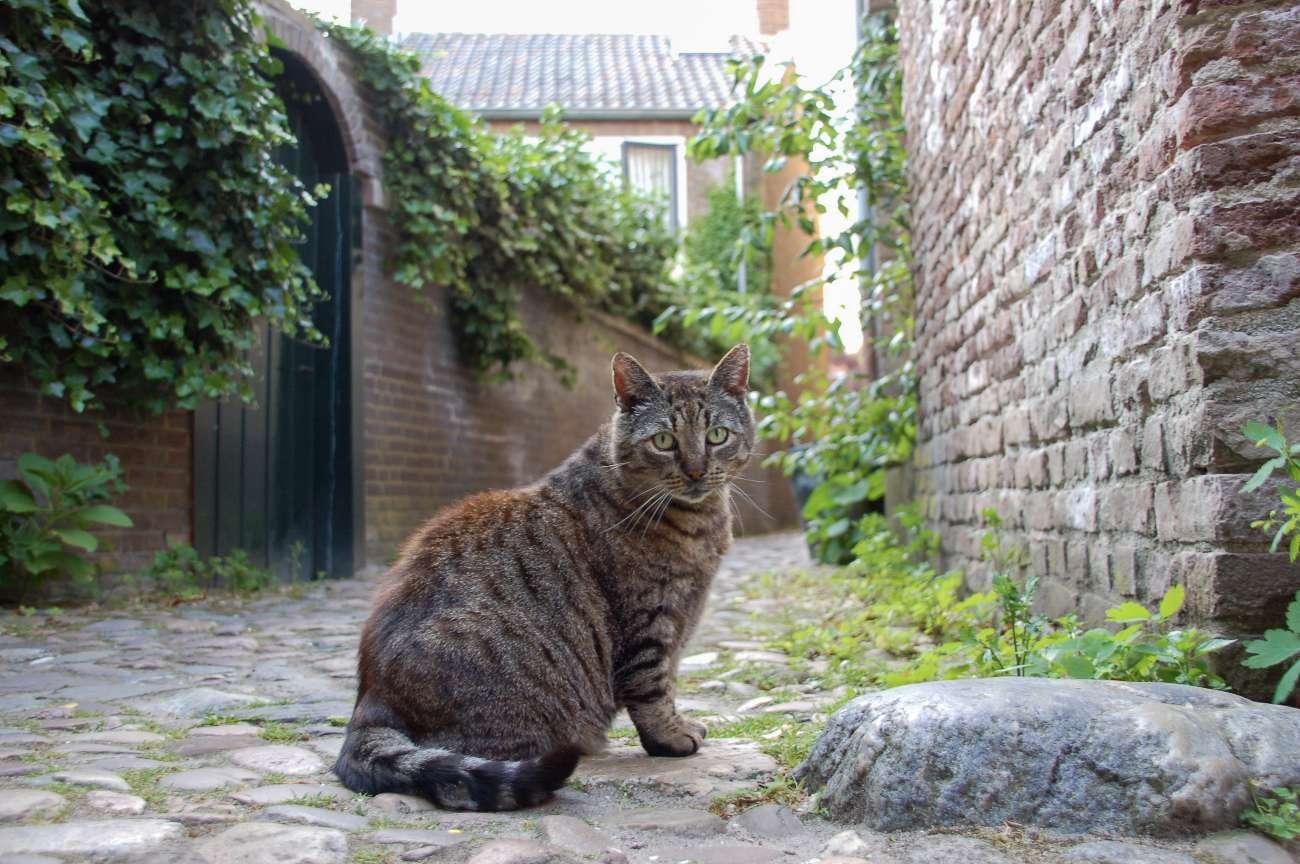 Eine Katze im malerischen Bergkwartier in Deventer