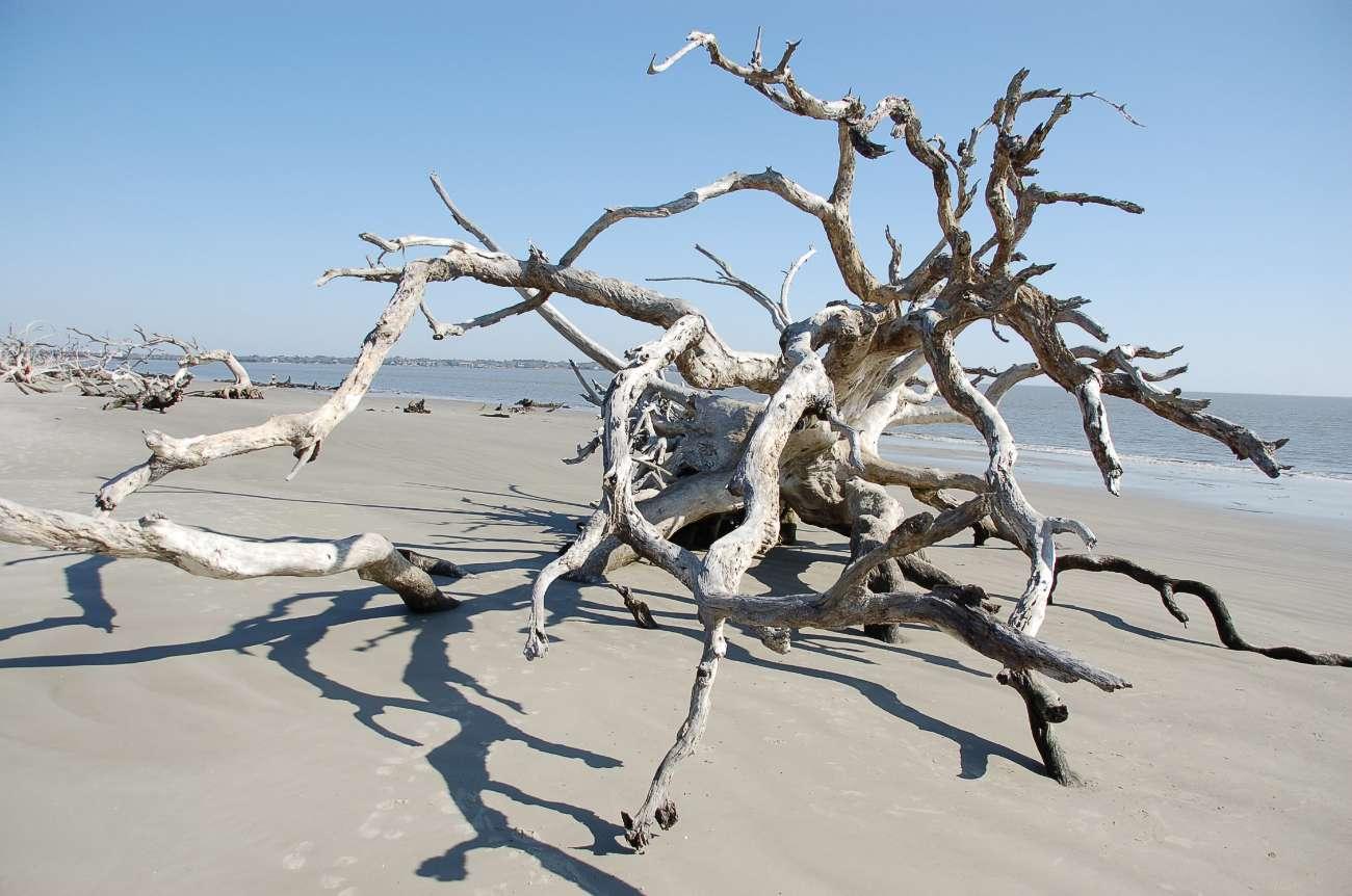 Totholz am Driftwood Beach auf Jekyll Island