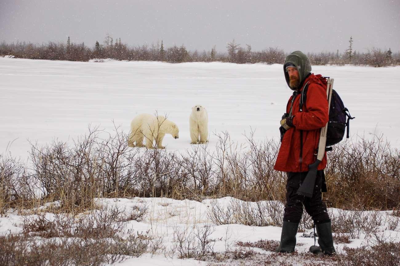 Zwei Eisbären an der Hudson Bay in Kanada mit Guide