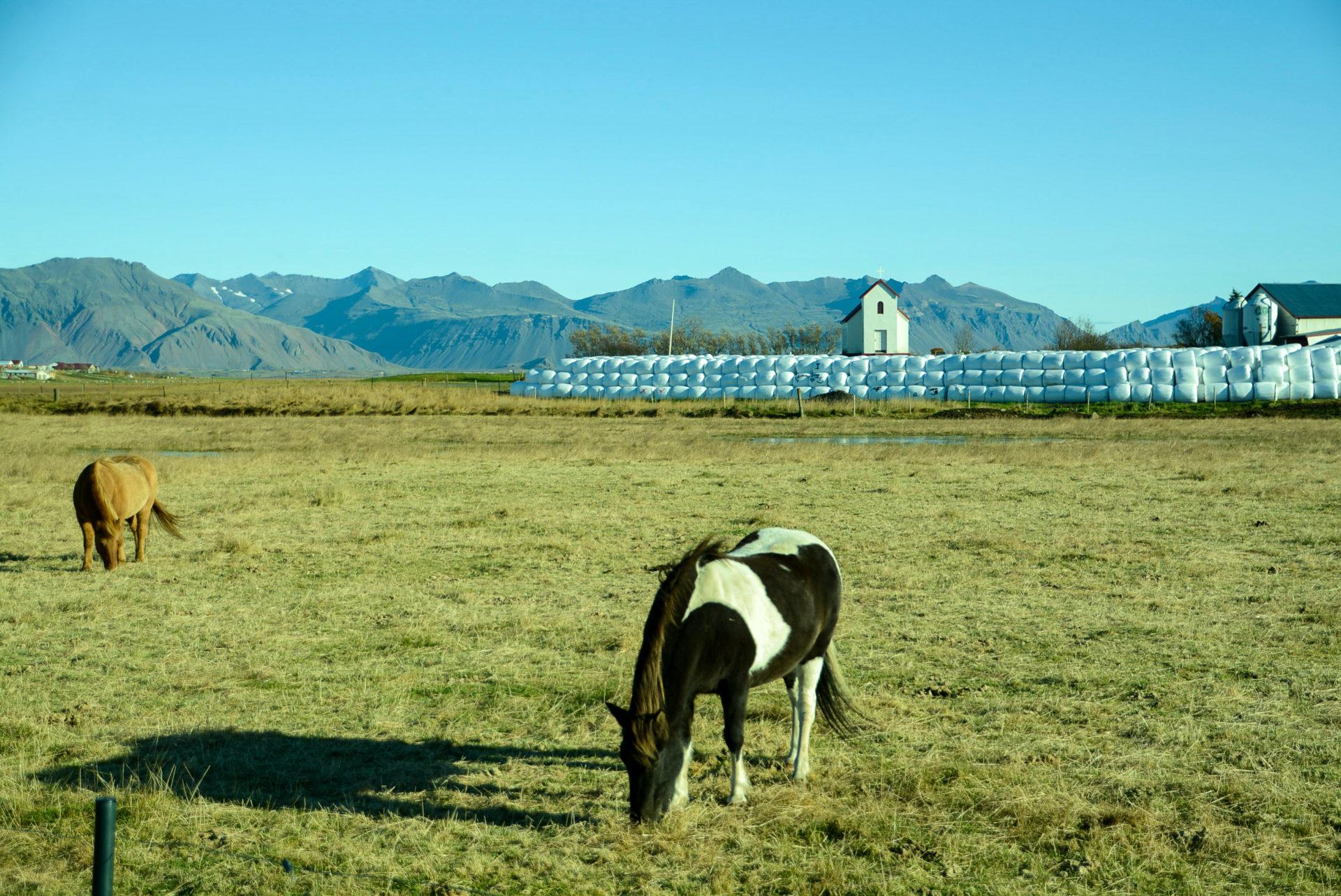 Islandponys auf dem Bauernhof Brunnholl im Südosten von Island