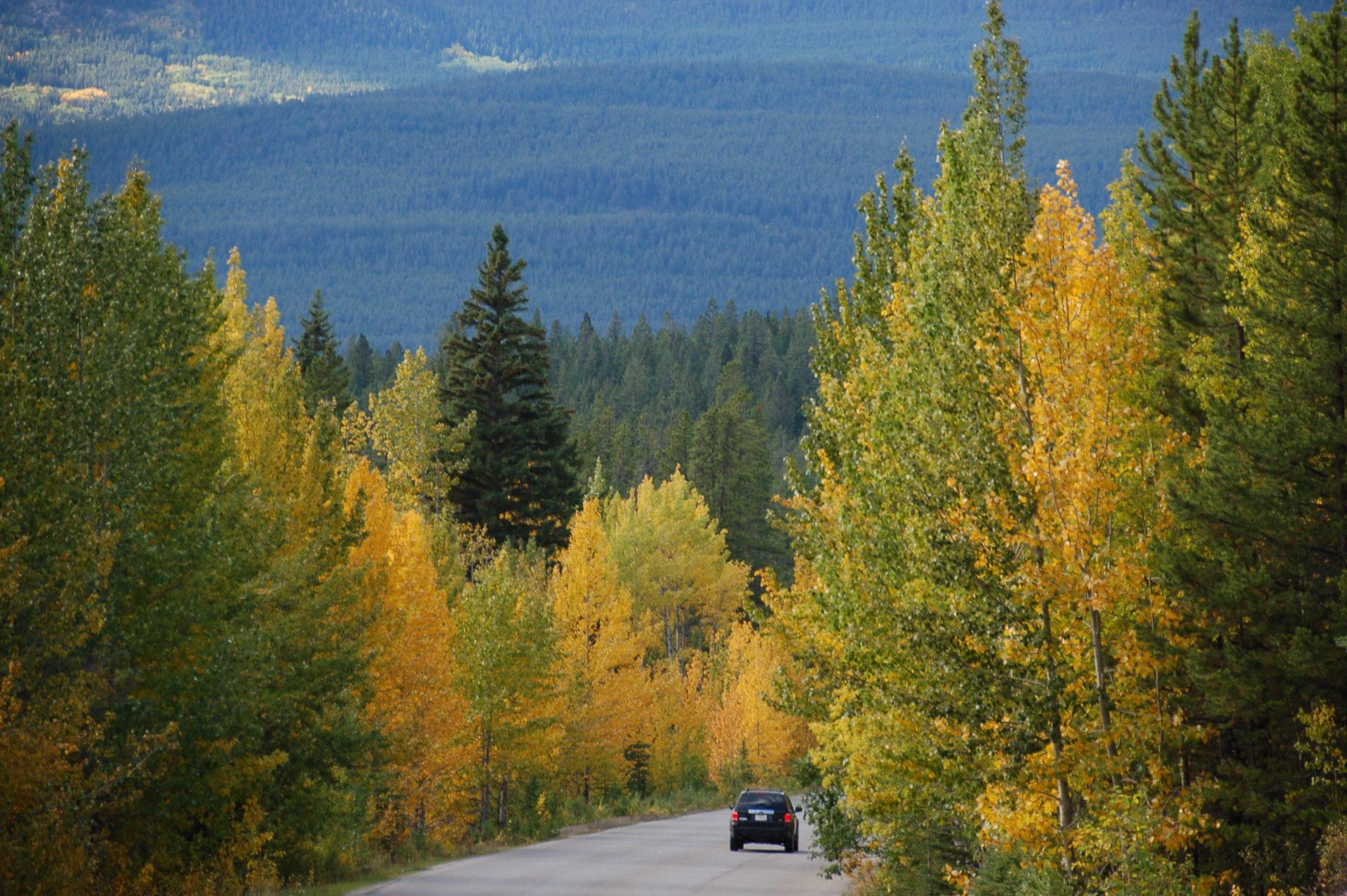 Herbstlaub in den kanadsischen Rocky Mountains in der Nähe von Jasper