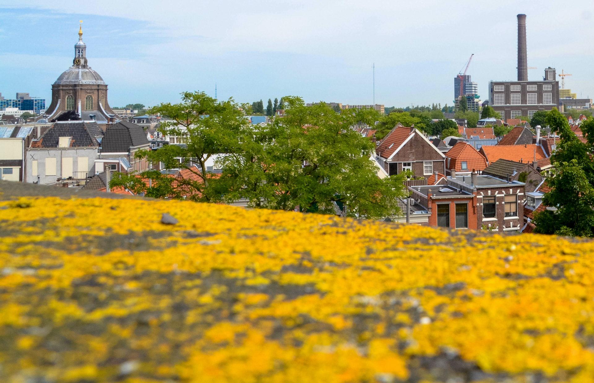 Ausblick von der Burcht van Leiden über die niederländische Stadt