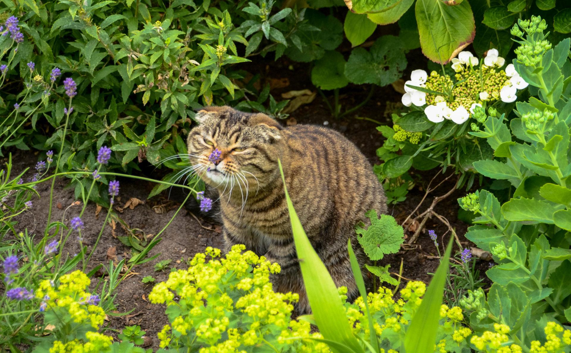 Eine mißmutige Katze in einem Garten in Leiden, Holland