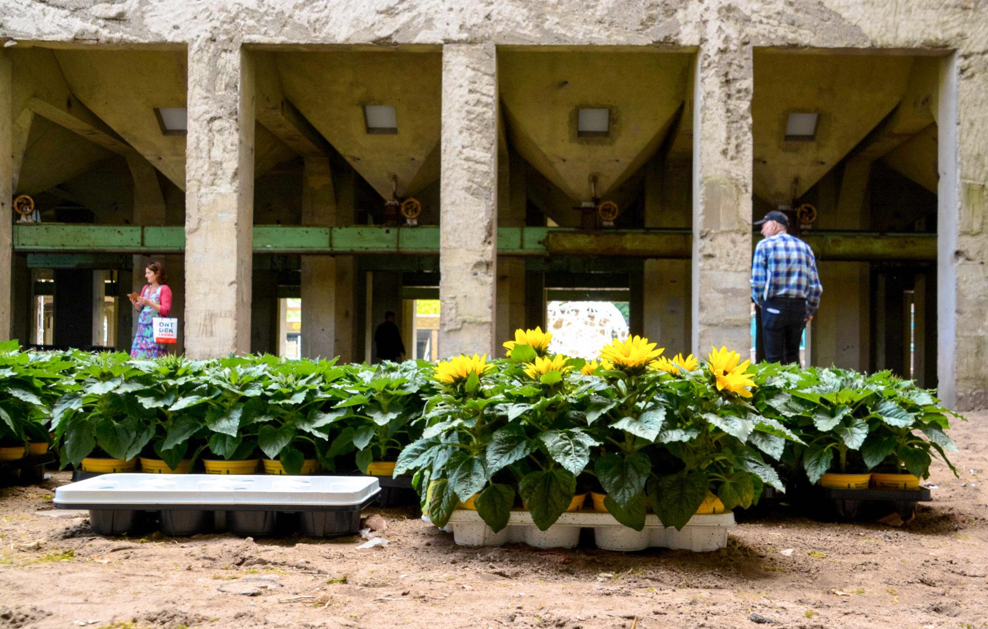 Blumen gehören zu den Top-Attraktionen in Leiden