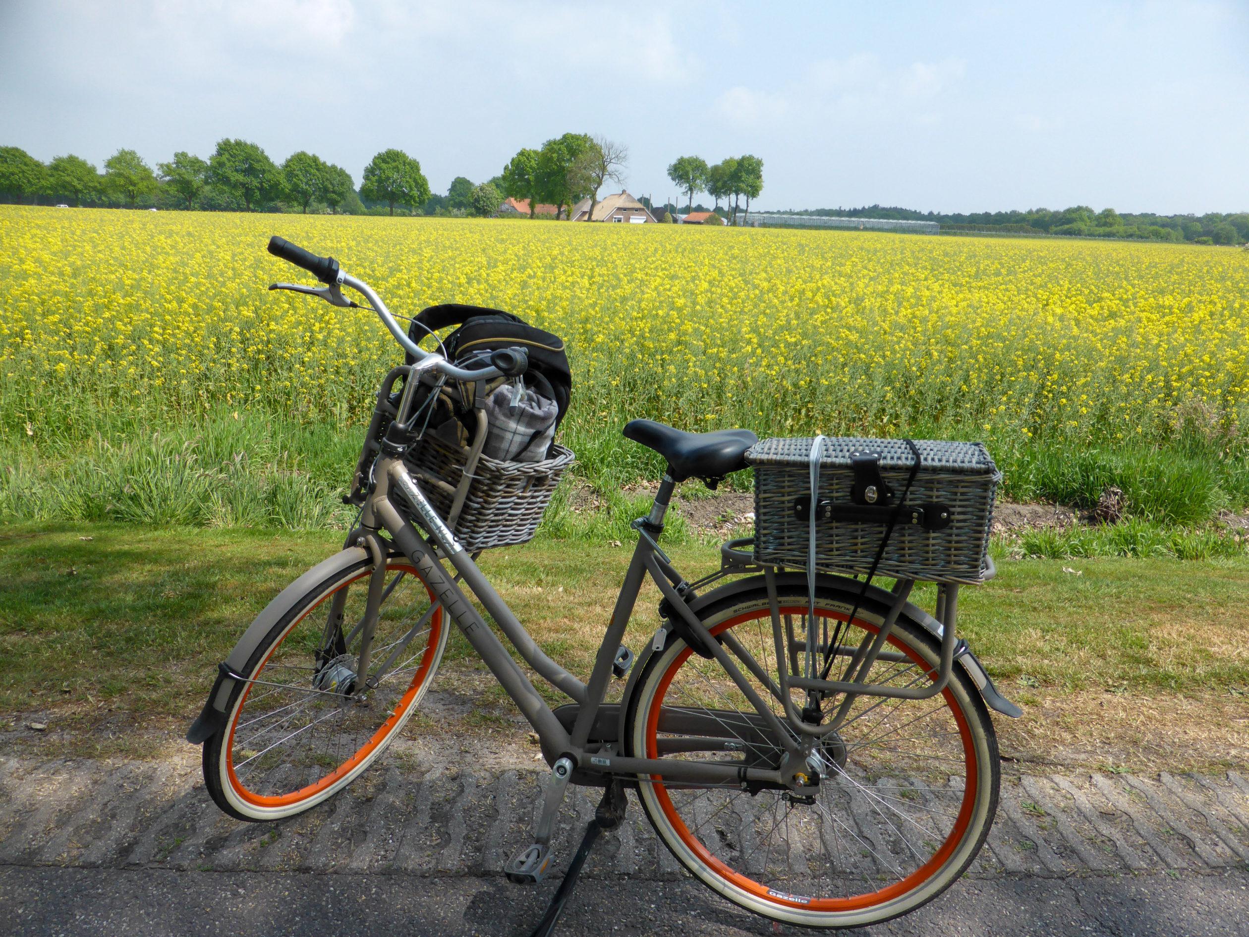 Fahrrad mit Picknickkorb vor einem blühenden Rapsfeld während der Radtour durch Overijjsel