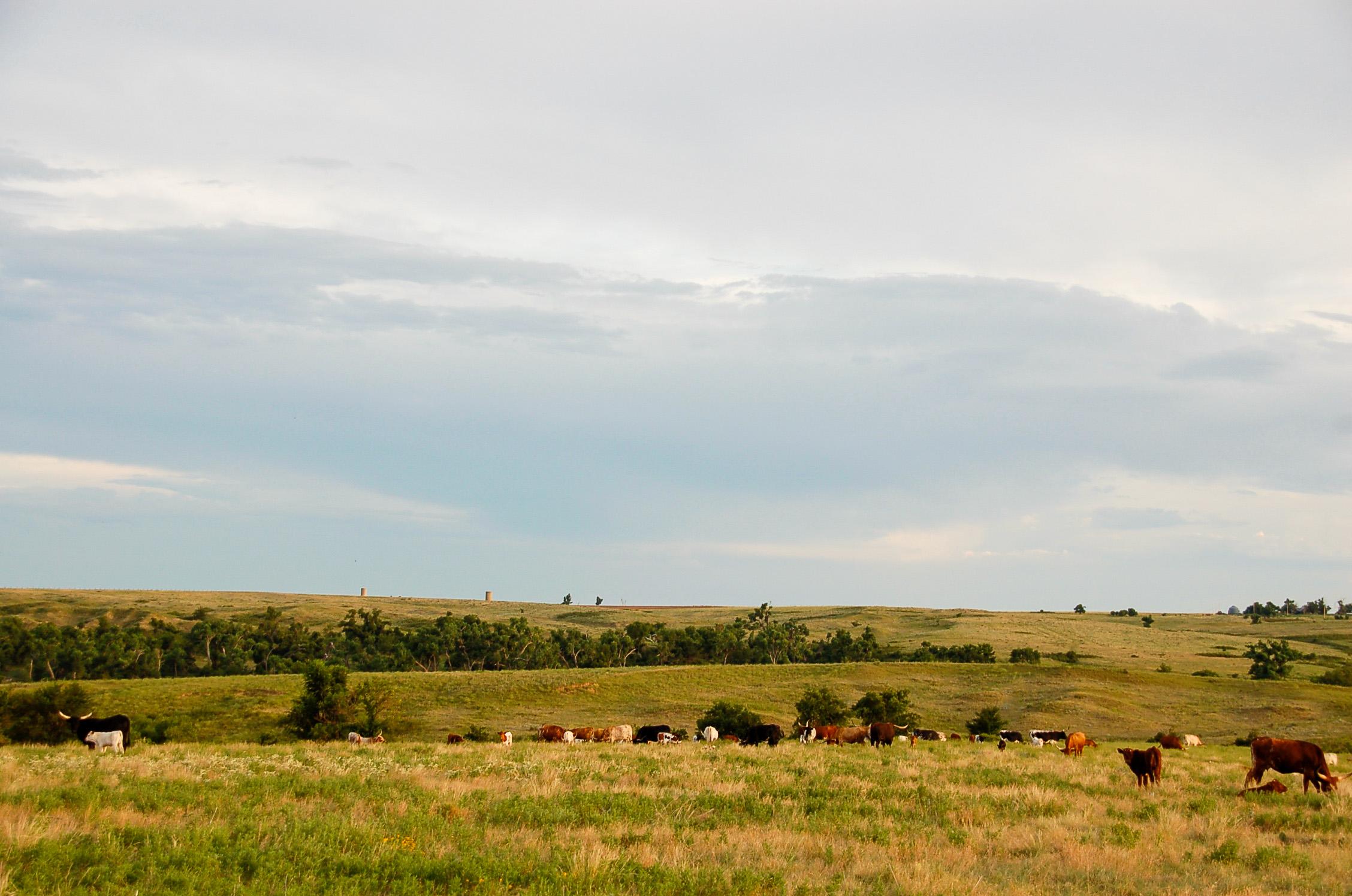 Rinder und saftige Wiesen - so stellen sich Europäer das wahre Amerika vor