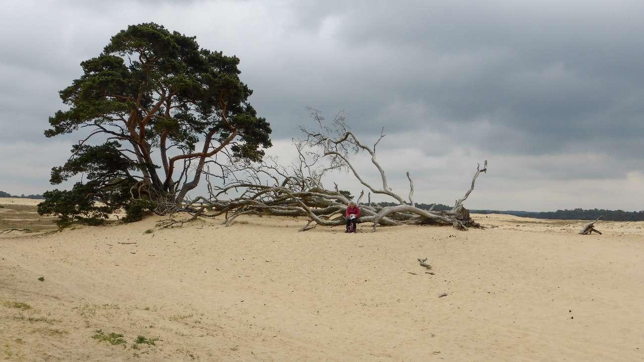 Wanderer ruhen auf einem toten Baumstamm in Gelderland in den Niederlanden