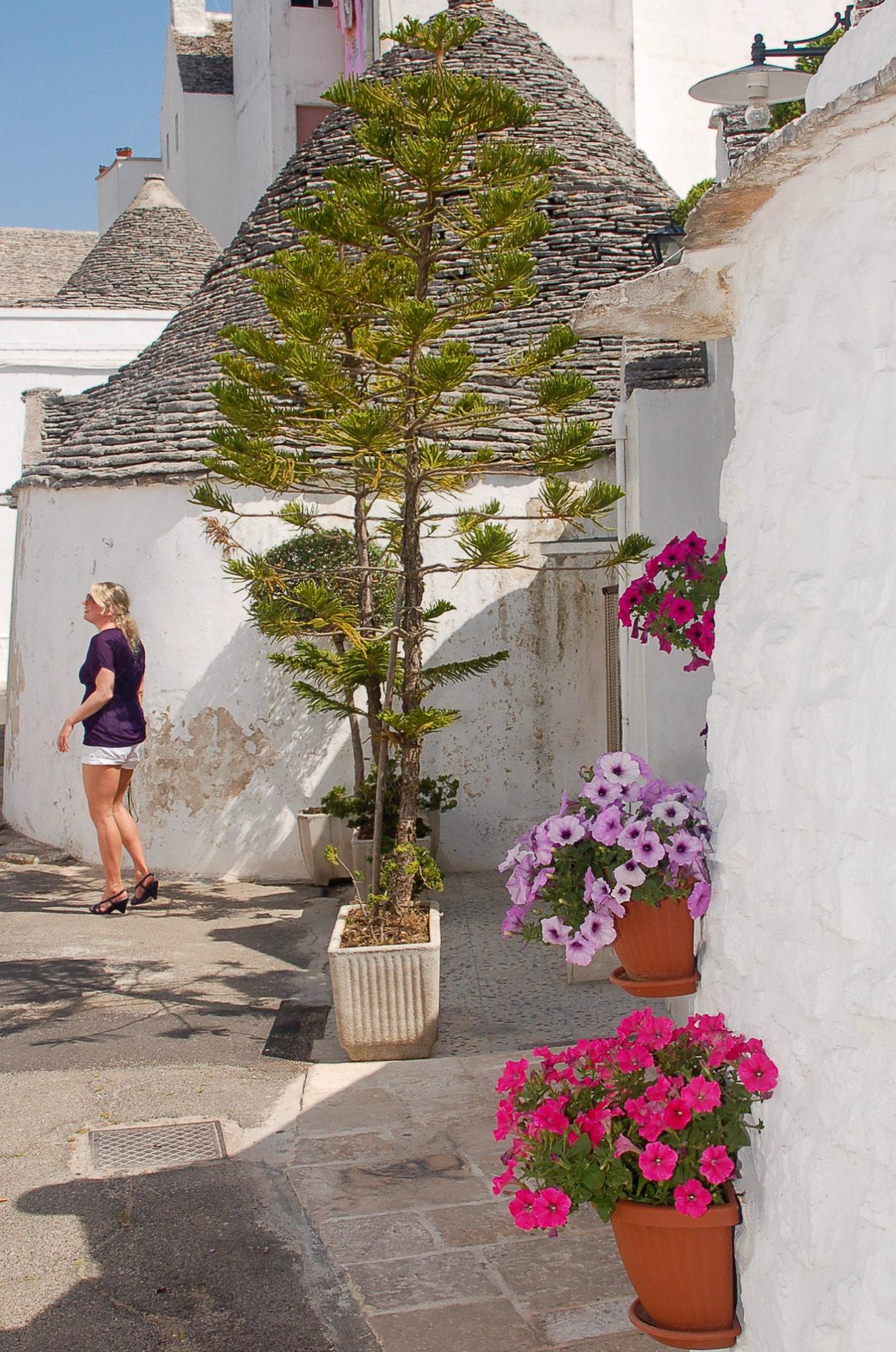 Eine Araukarie und Geranien mit einer Frau vor einem Trullo in Alberobello
