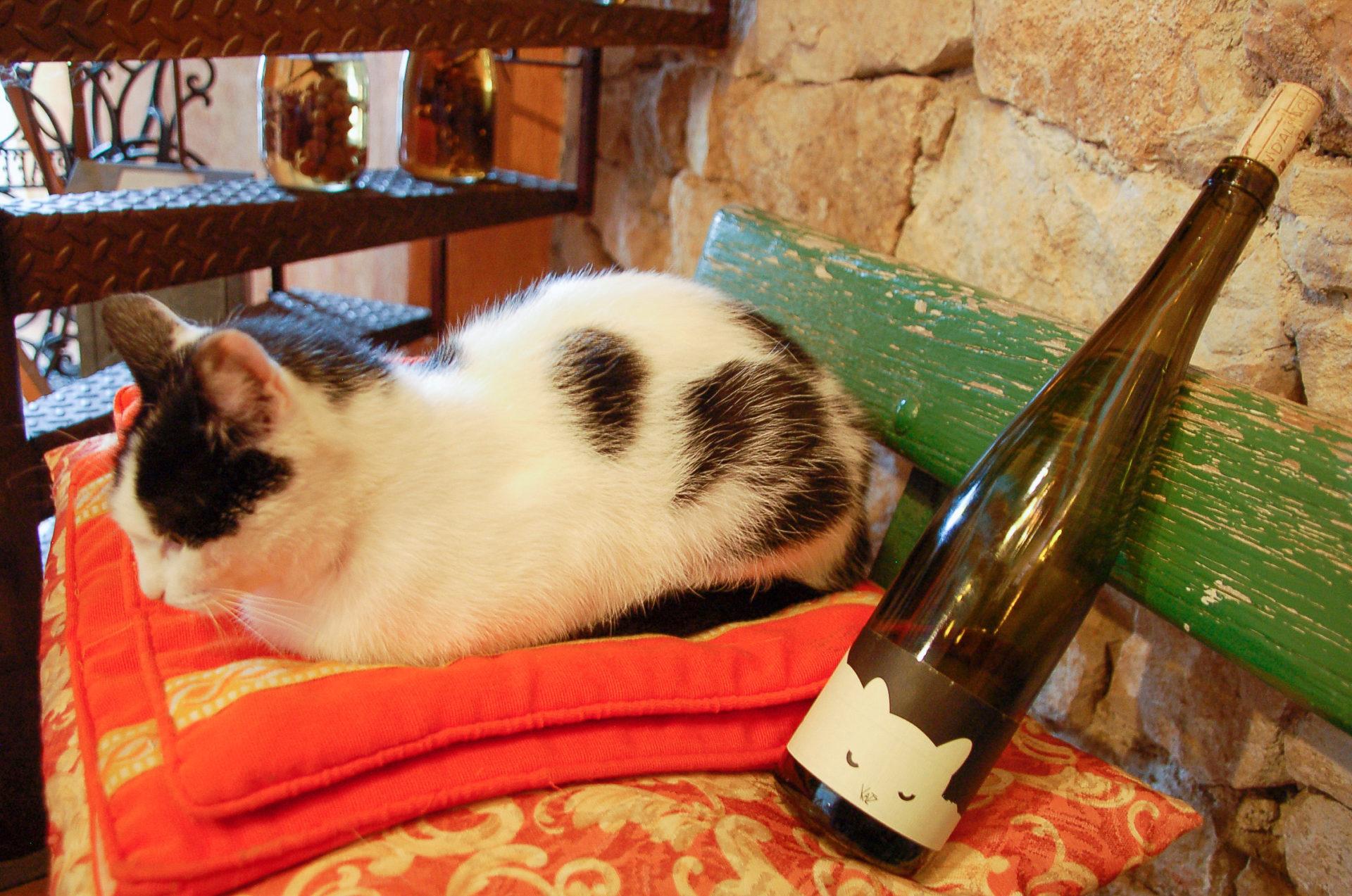 Katze mit Katzenwein in Katzenthal im Elsass
