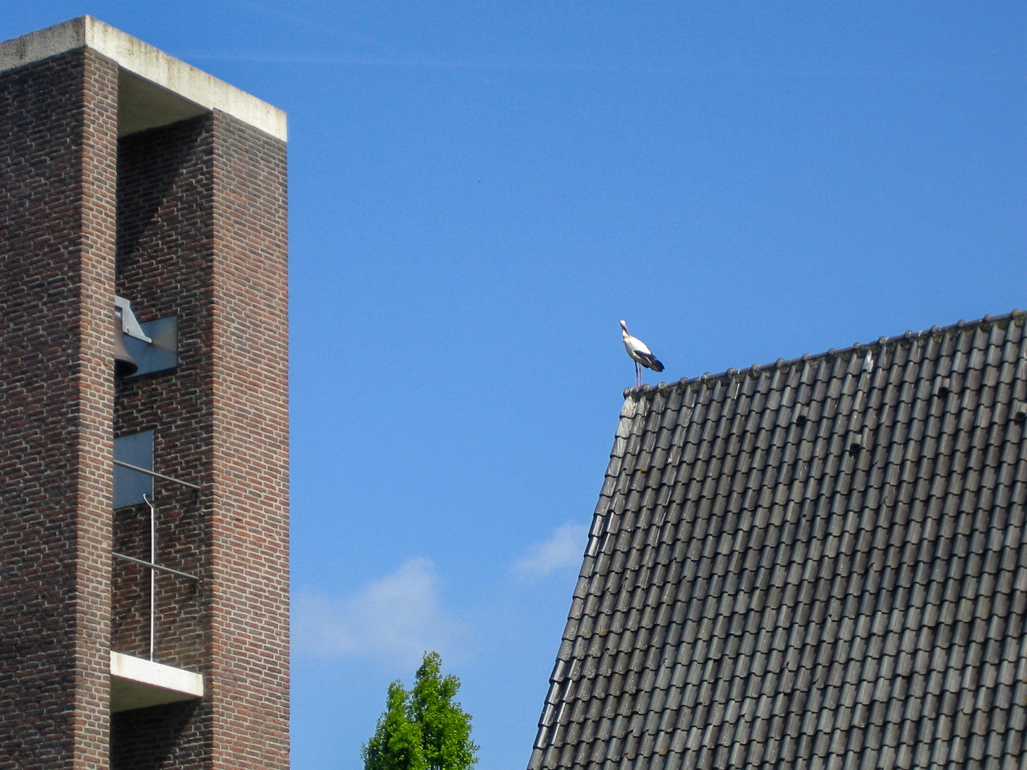 Ein Storch auf einem Hausdach in der Nähe des Ferienpark in Giethoorn ind er Provinz Overijssel