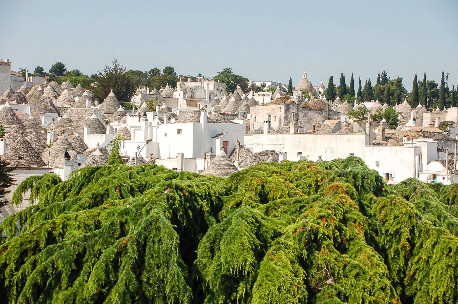 Nadelbäume vor der Kulisse der Trulli von Alberobello in Apulien