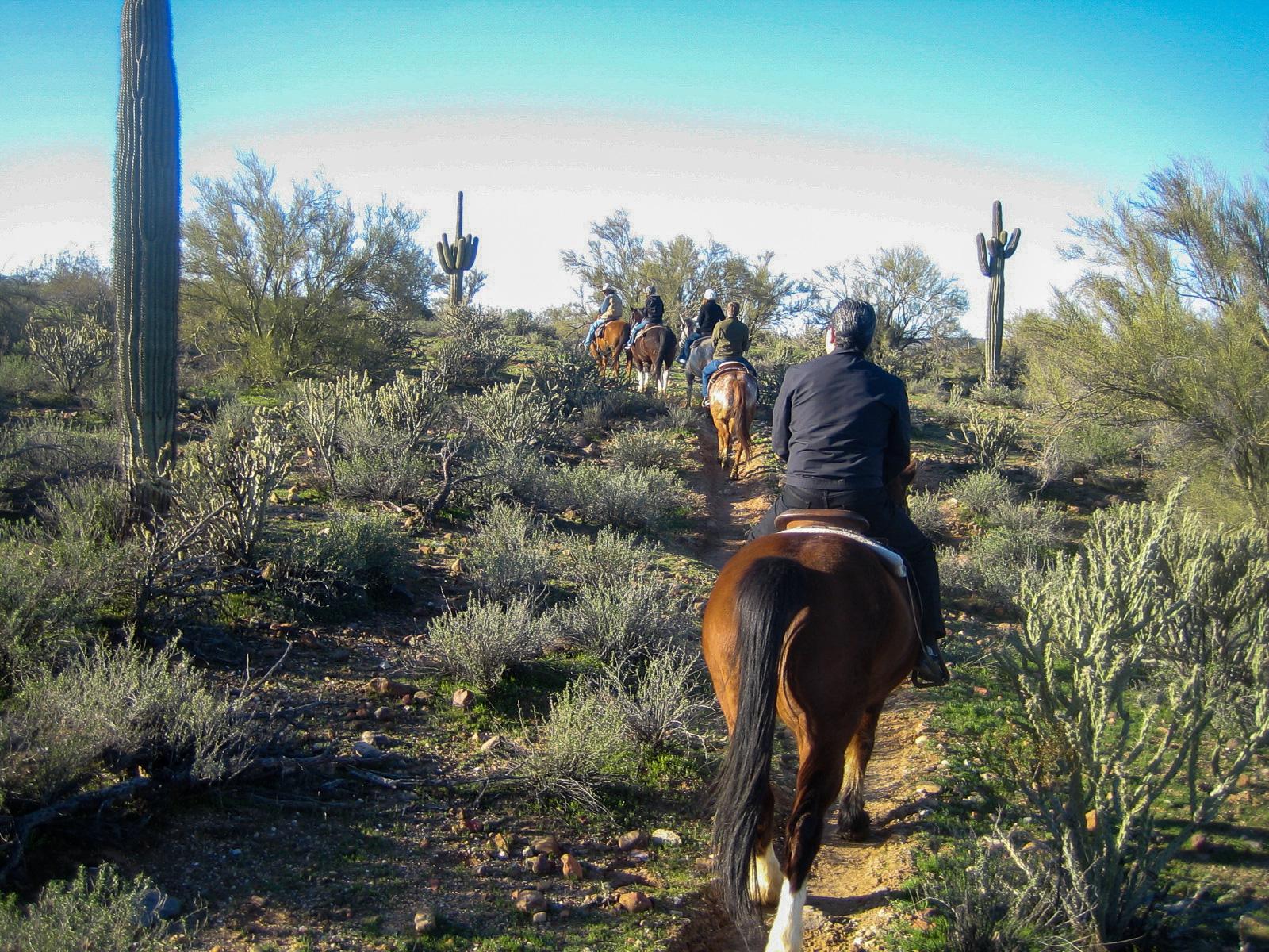 Eine Gruppe Reiter mit Saguaro-Kakteen in Arizona