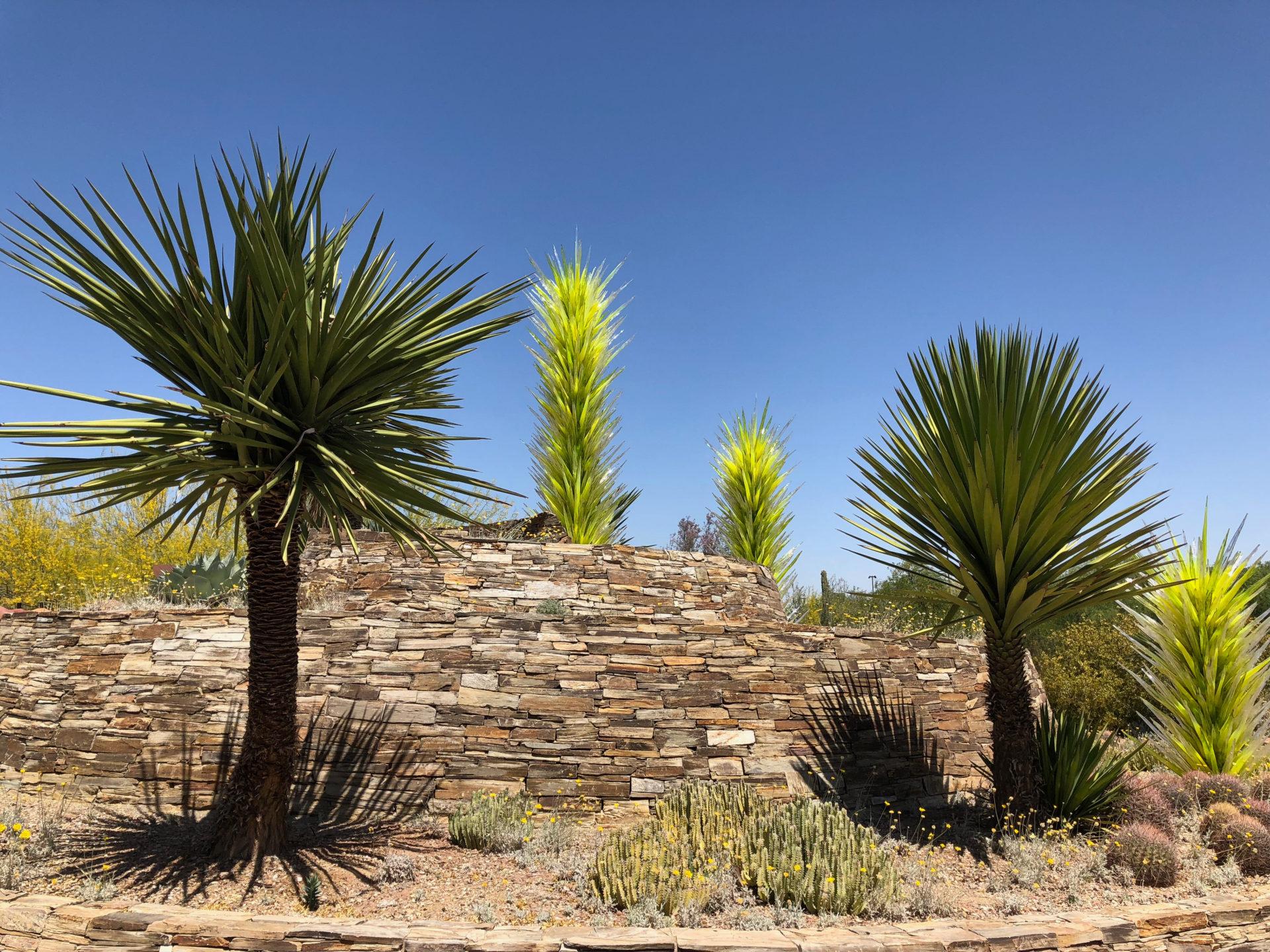 Stechpalmen mit Palmen aus Glas von Dale Chihuly im kürzlich besuchten Botanischen Garten von Scottsdale in Arizona