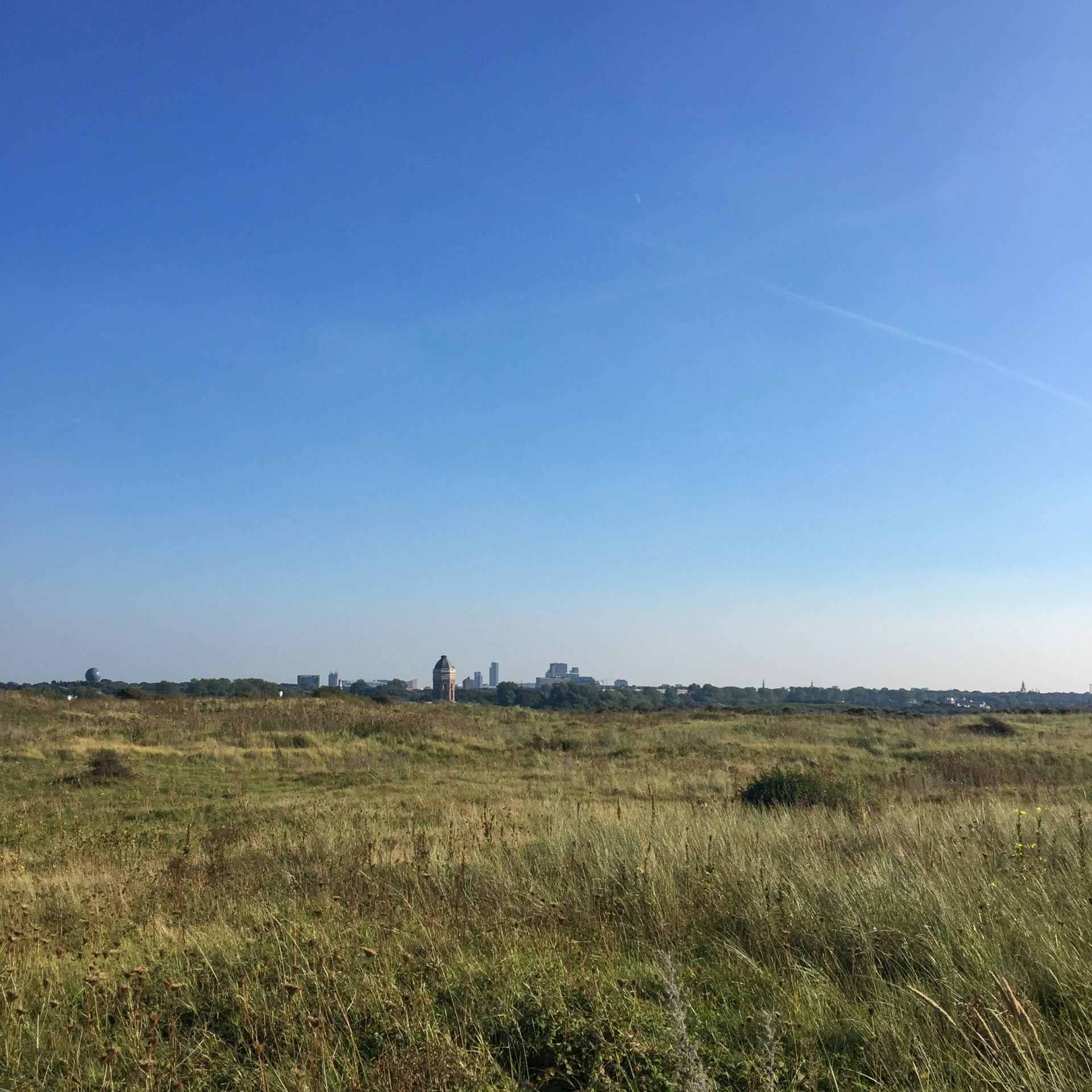 Das Dünengebiet Meijendel in Scheveningen mit Blick auf die Skyline von Den Haag