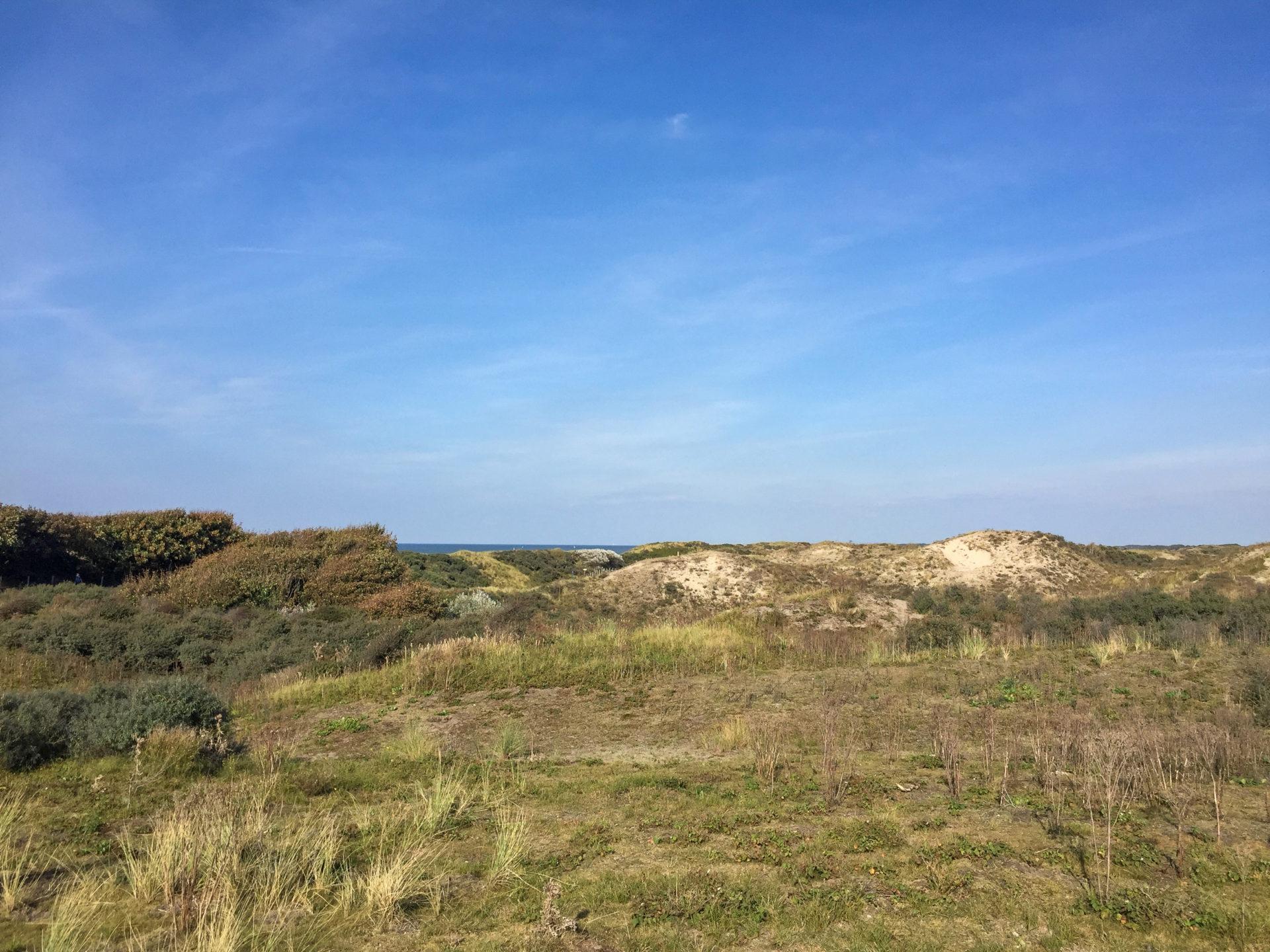 Das Dünengebiet Meijendel gewährt perfekte Tage in Den Haag