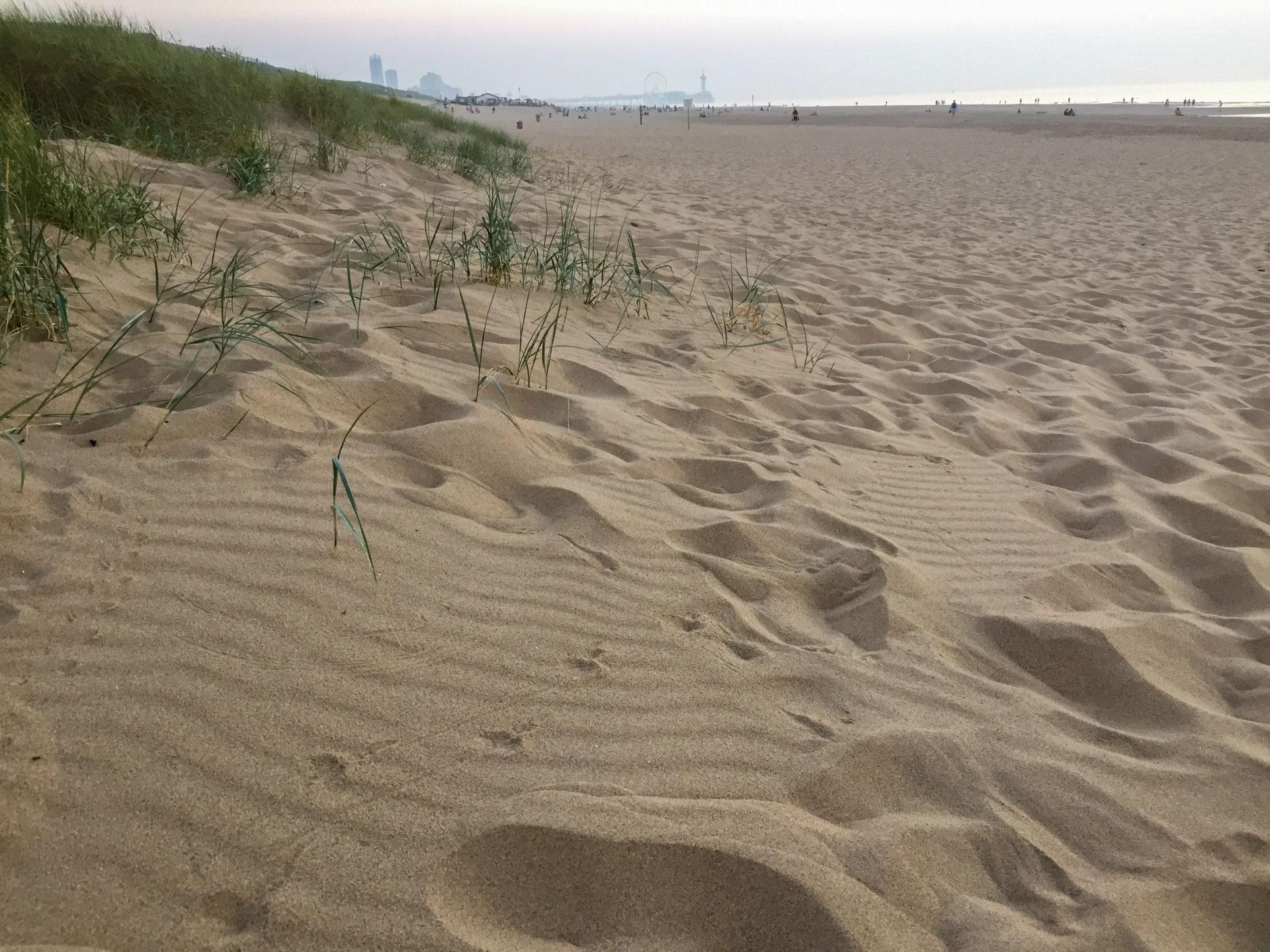 Strand im Dünengebiet Meijendel in Den Haag