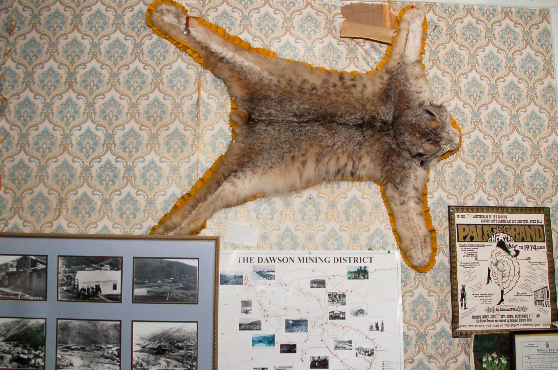 Luxfell an der Wand eines Zimmers im Yukon