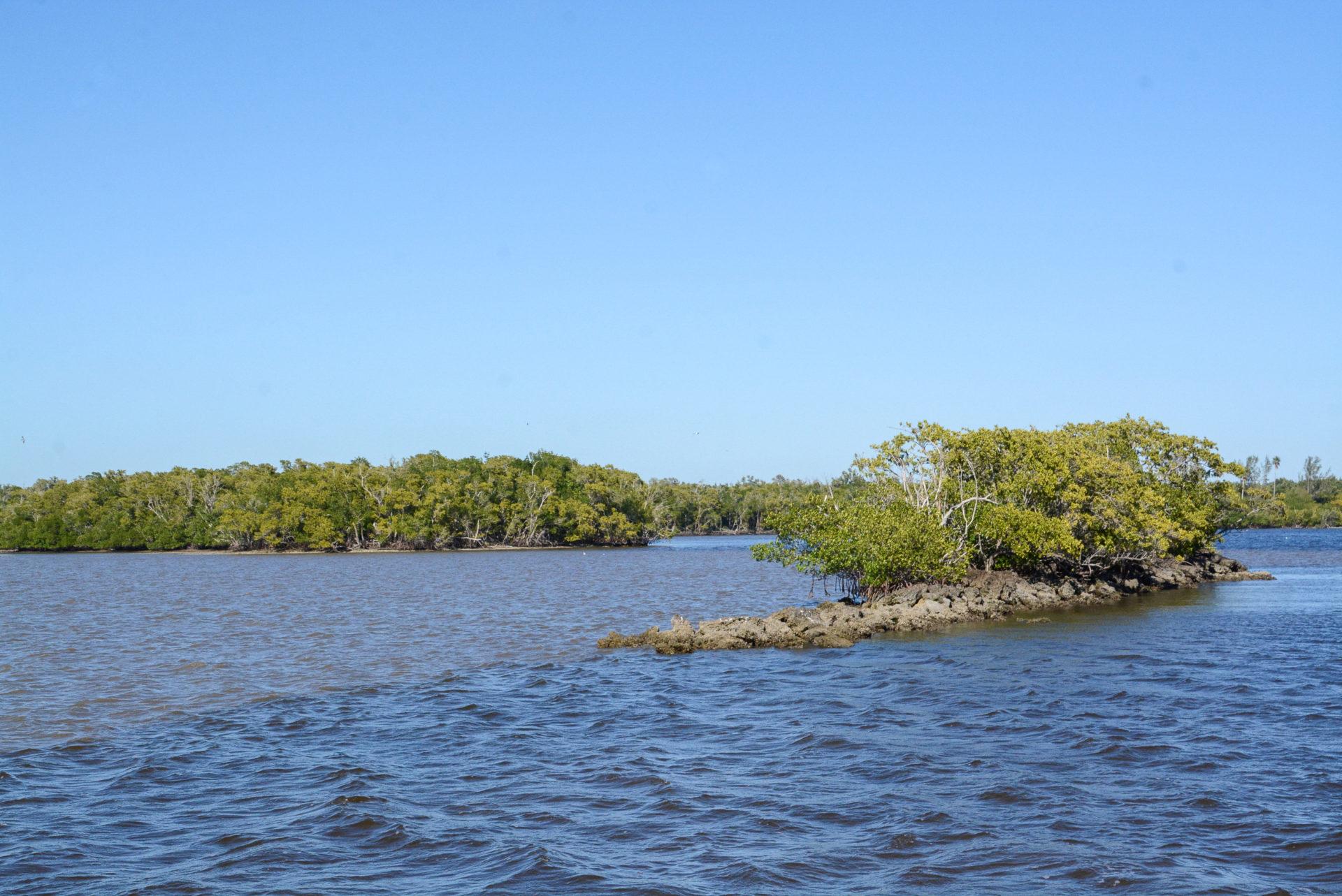 Mangroveninseln in den Everglades in Florida