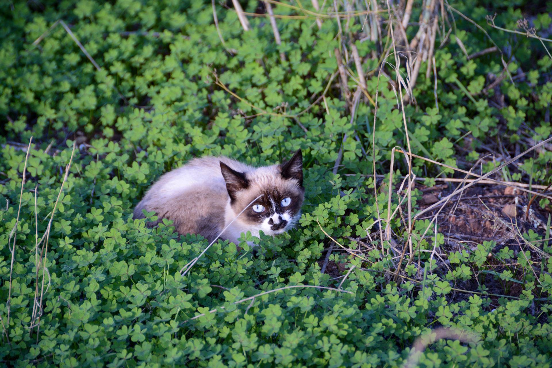 Katze am Rocha da Pena in Portugal