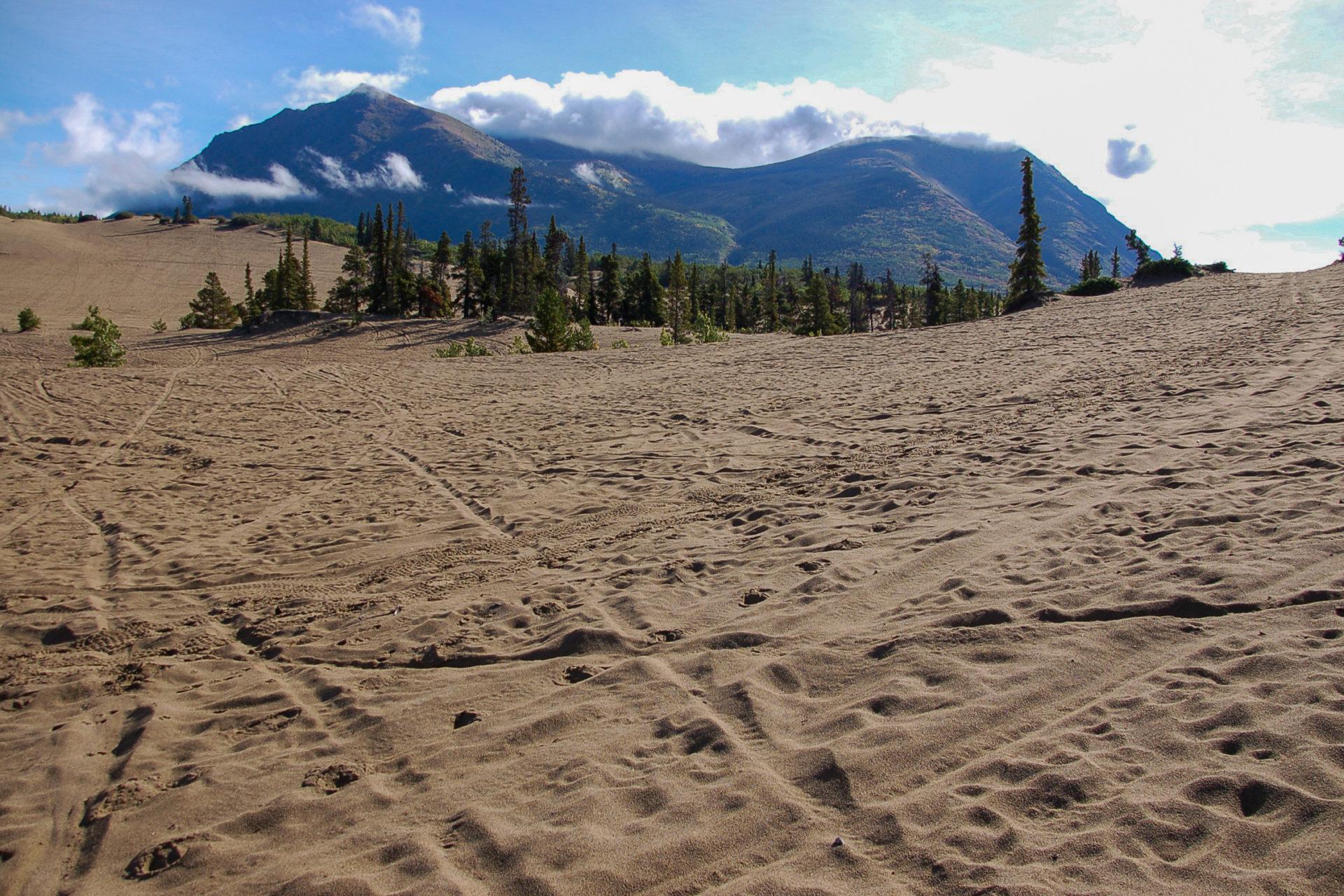 Carcross Desert im kanadischen Yukon gilt als kleinste Wüste der Welt