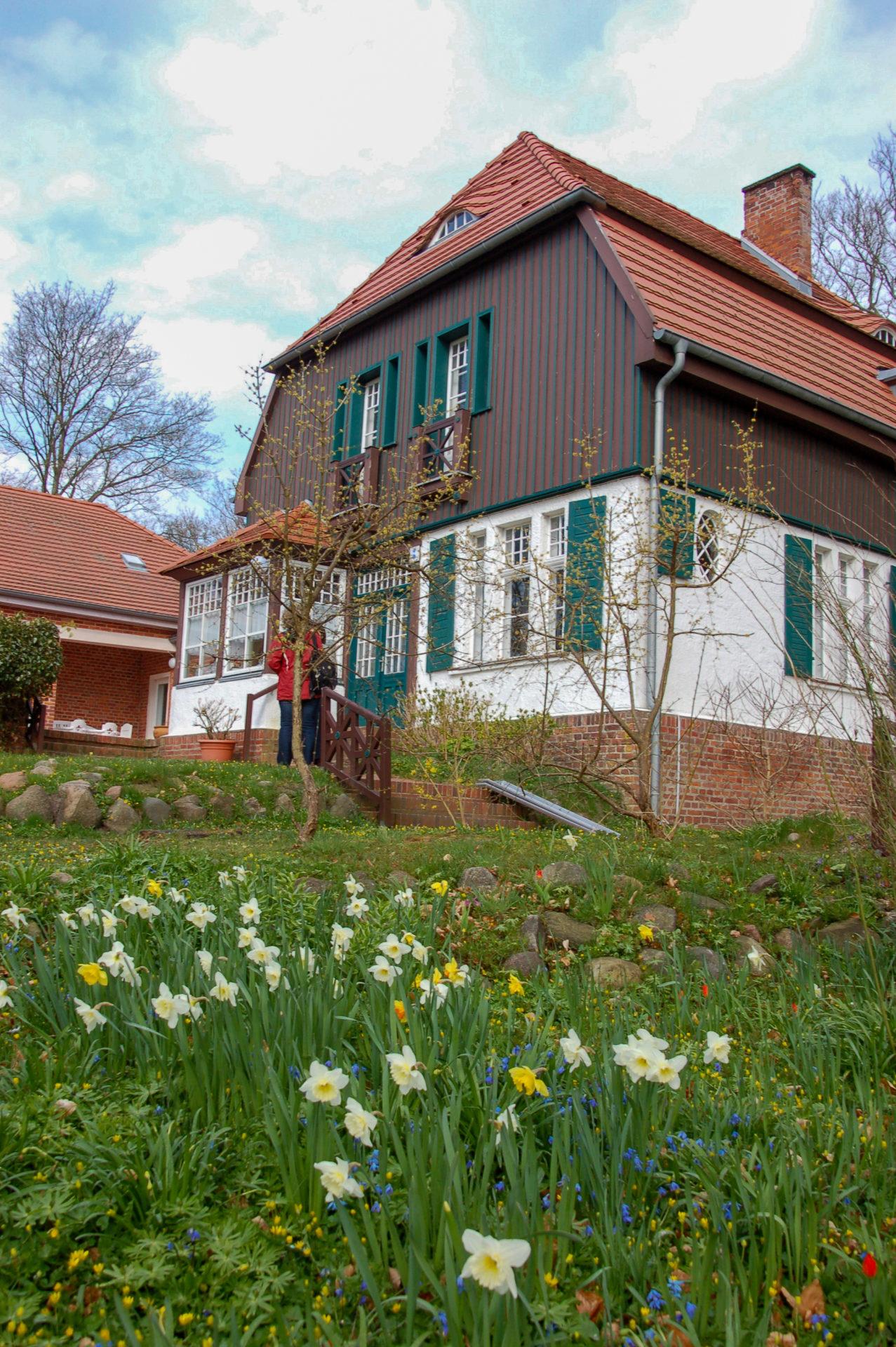 Osterglöckchen vor dem Gerhart-Hauptmann-Haus auf Hiddensee.