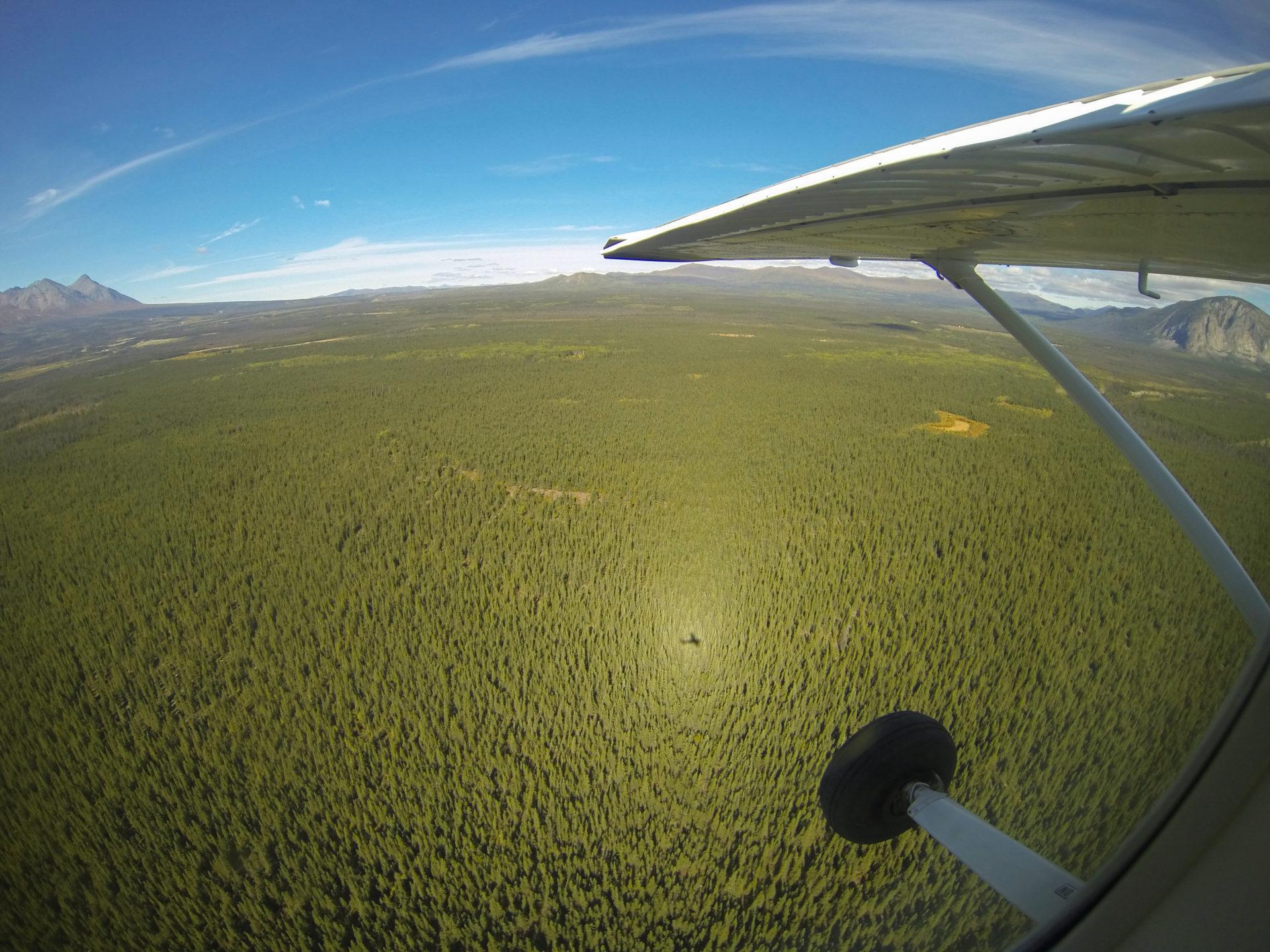 Schatten eines Sportflugzeugs über dem urwald im kanadischen Yukon