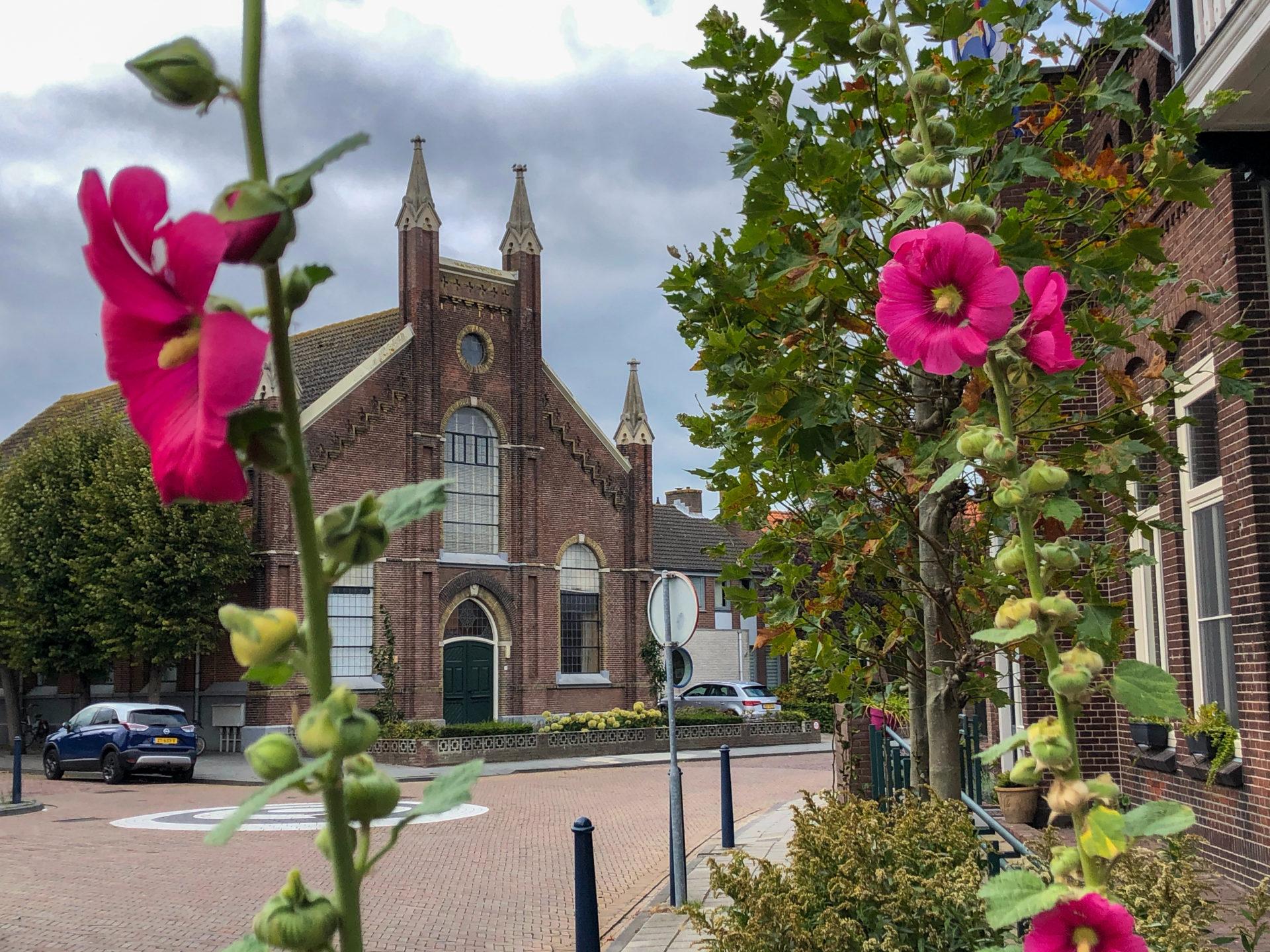 Kirche mit Dünenrosen in Yerseke in Zeeland.