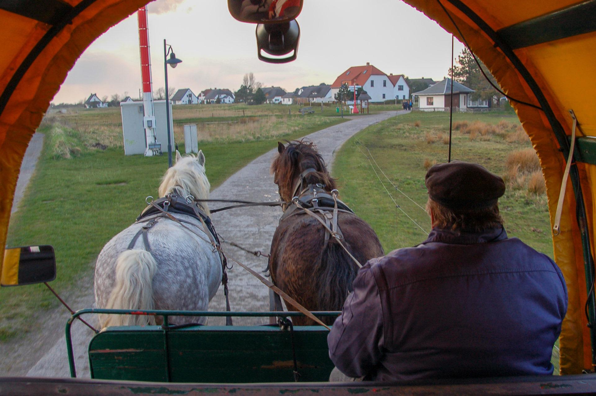 Kutscher mit Pferdewagen auf Hiddensee