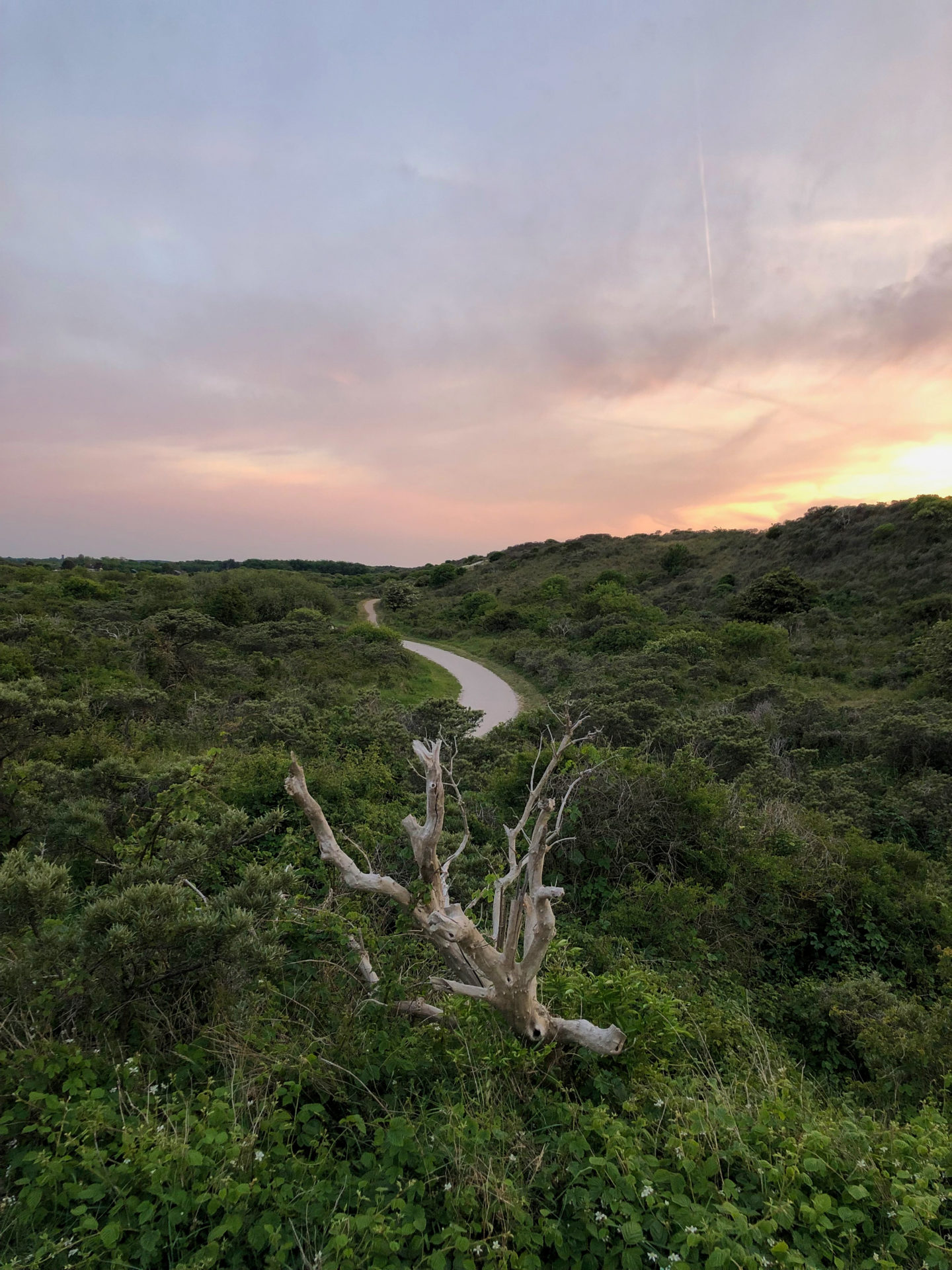 Wanderweg in den Dünen von Zeeland auch bekannt als Perlenroute
