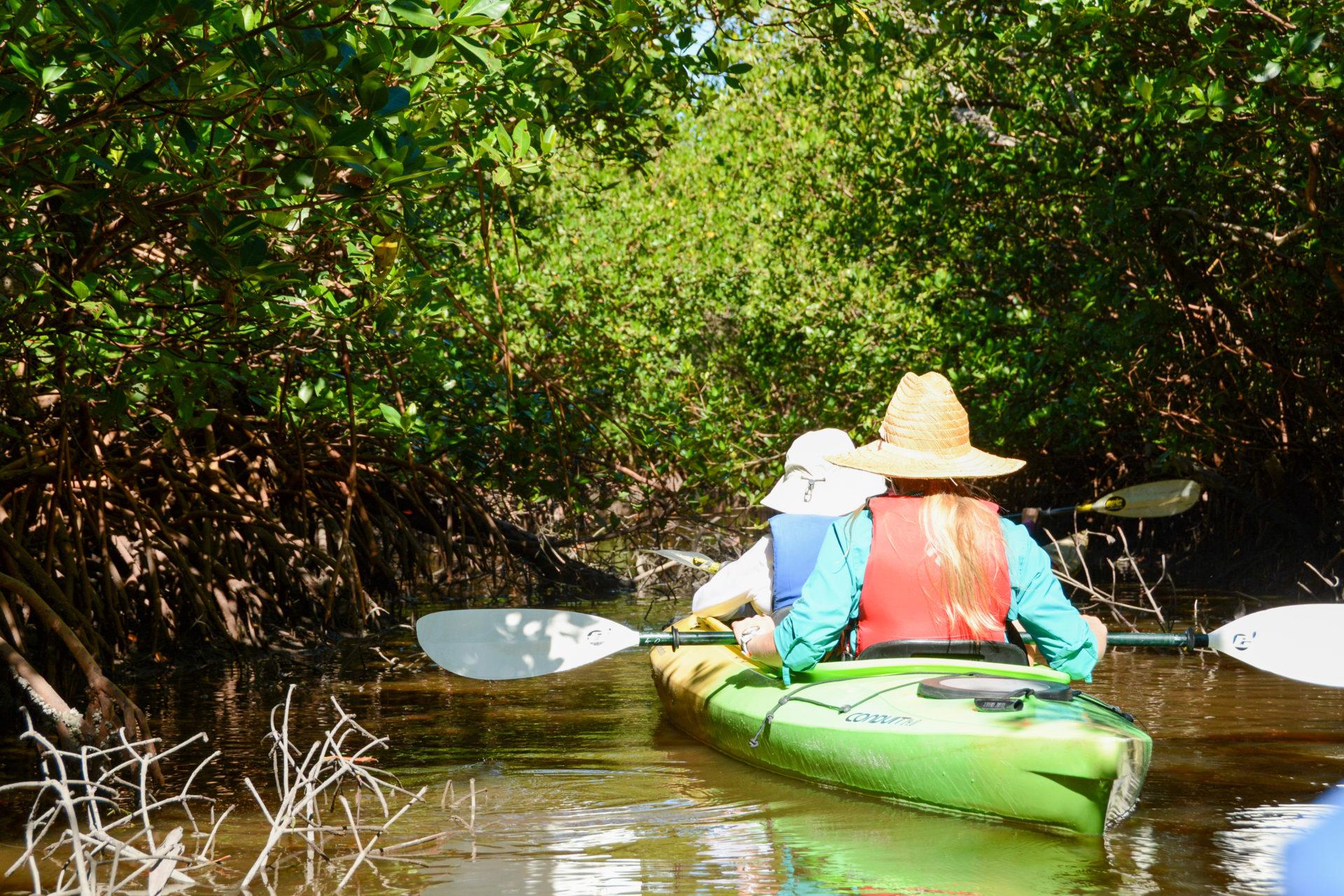 Kanutour durch die Mangroven bei Captiva Island in Florida