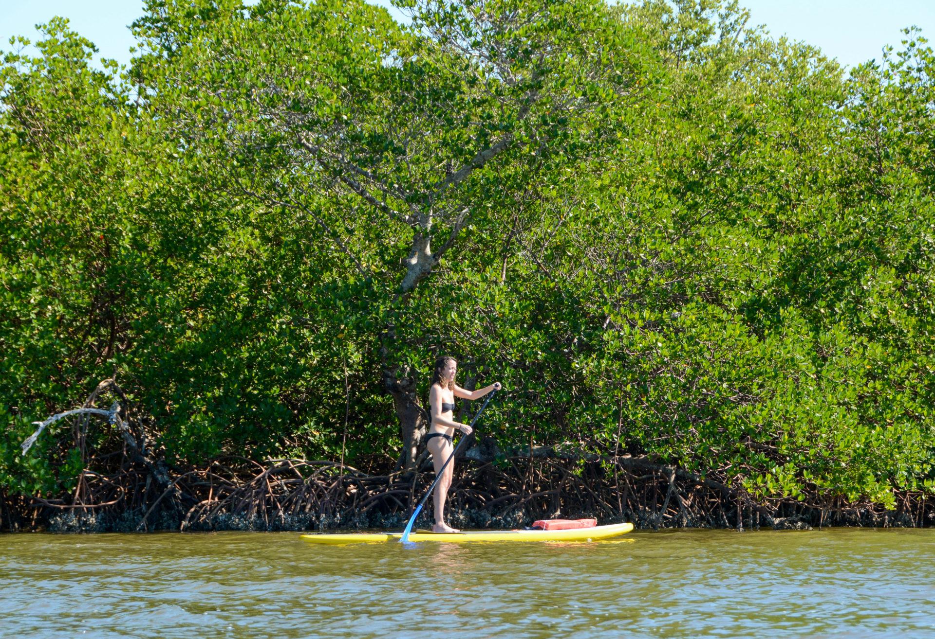 Suppen bei Captiva Island in Florida mit Mangroven im Hintergrund.